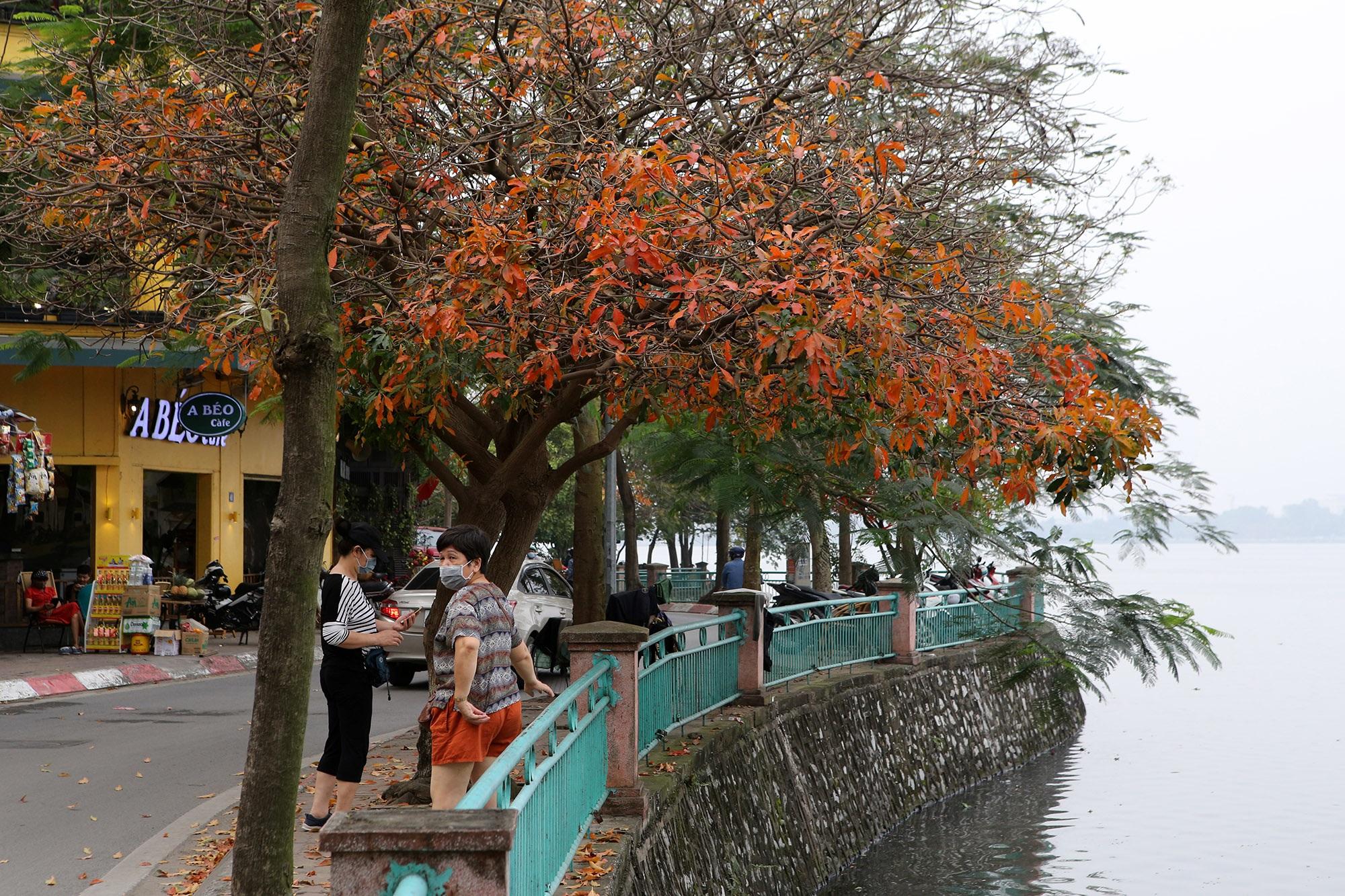 Hà Nội: Ngắm hồ Tây đẹp lãng mạn vào mùa cây thay lá - 3