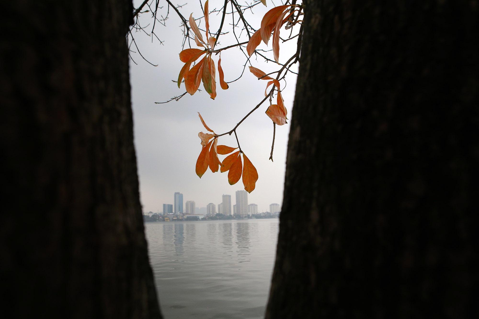 Hà Nội: Ngắm hồ Tây đẹp lãng mạn vào mùa cây thay lá - 5