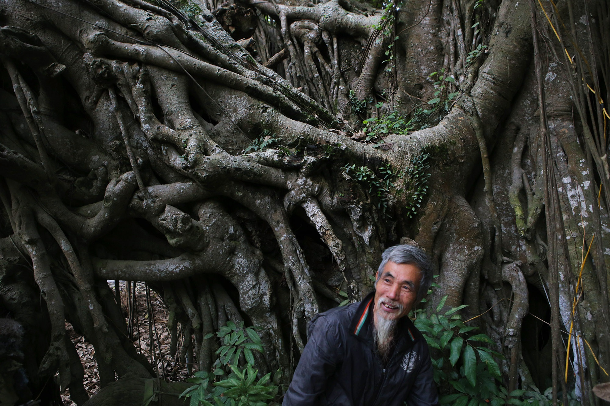 Chuyện ít người biết về cây đa khổng lồ ở xã Viên Nội - 7