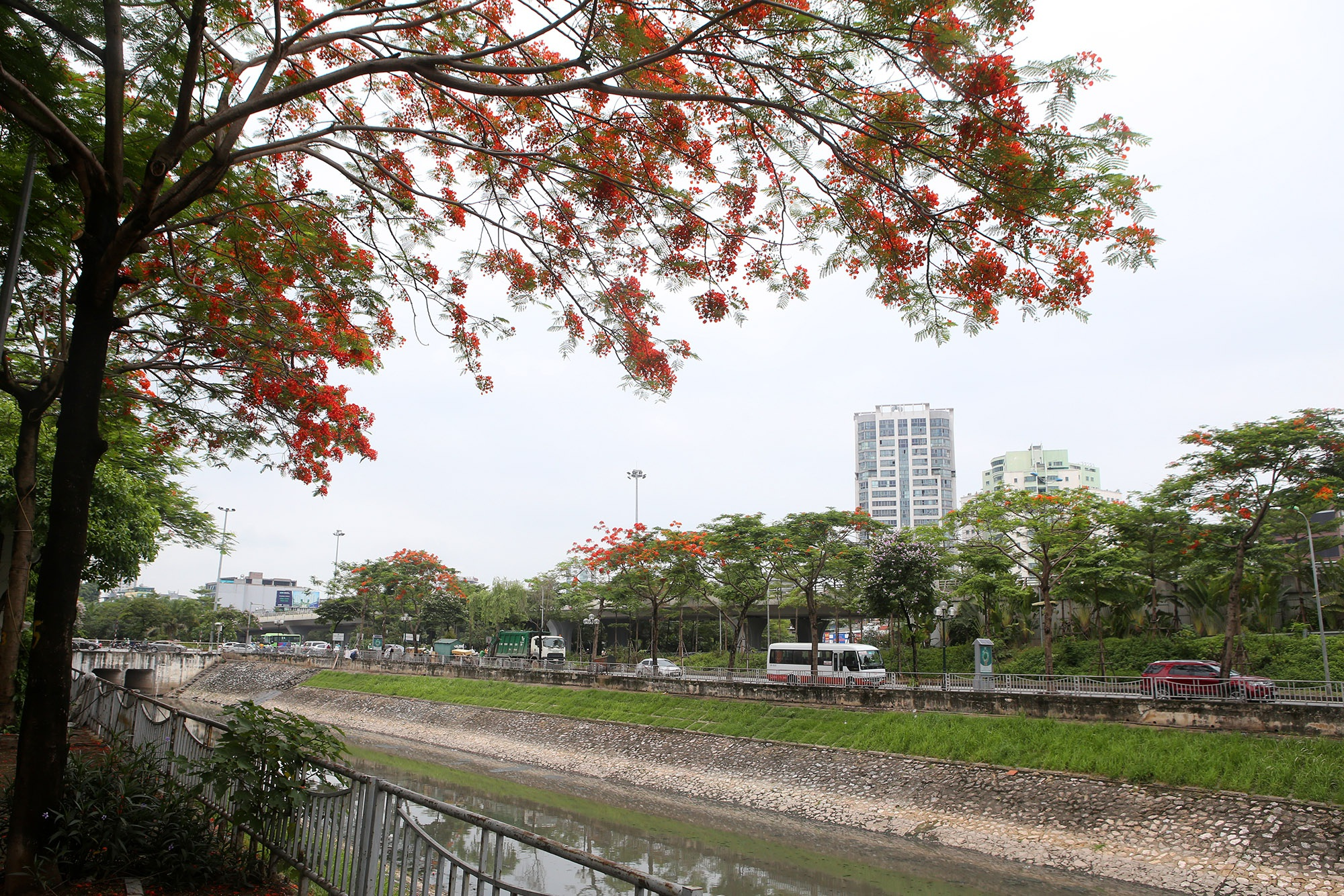 Hoa phượng đỏ rực rỡ khắp Hà Nội - 10
