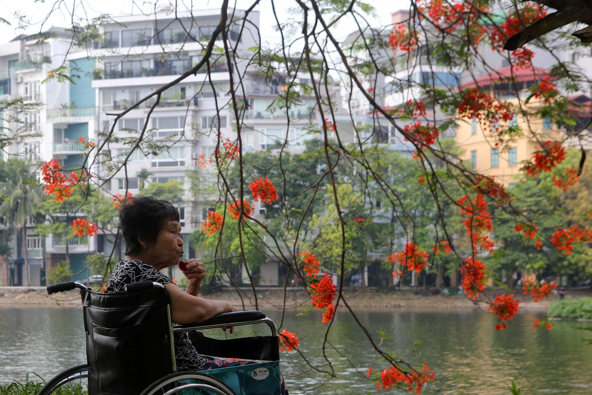 Hoa phượng đỏ rực rỡ khắp Hà Nội - 15