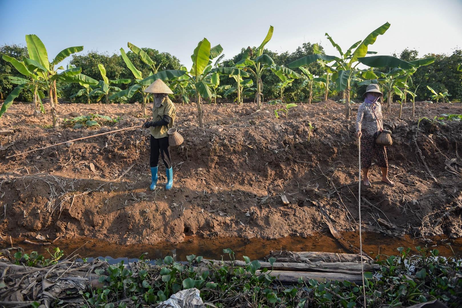 Câu con lộc trời cho: nông dân Hải Dương kiếm nửa triệu đồng mỗi ngày - 5
