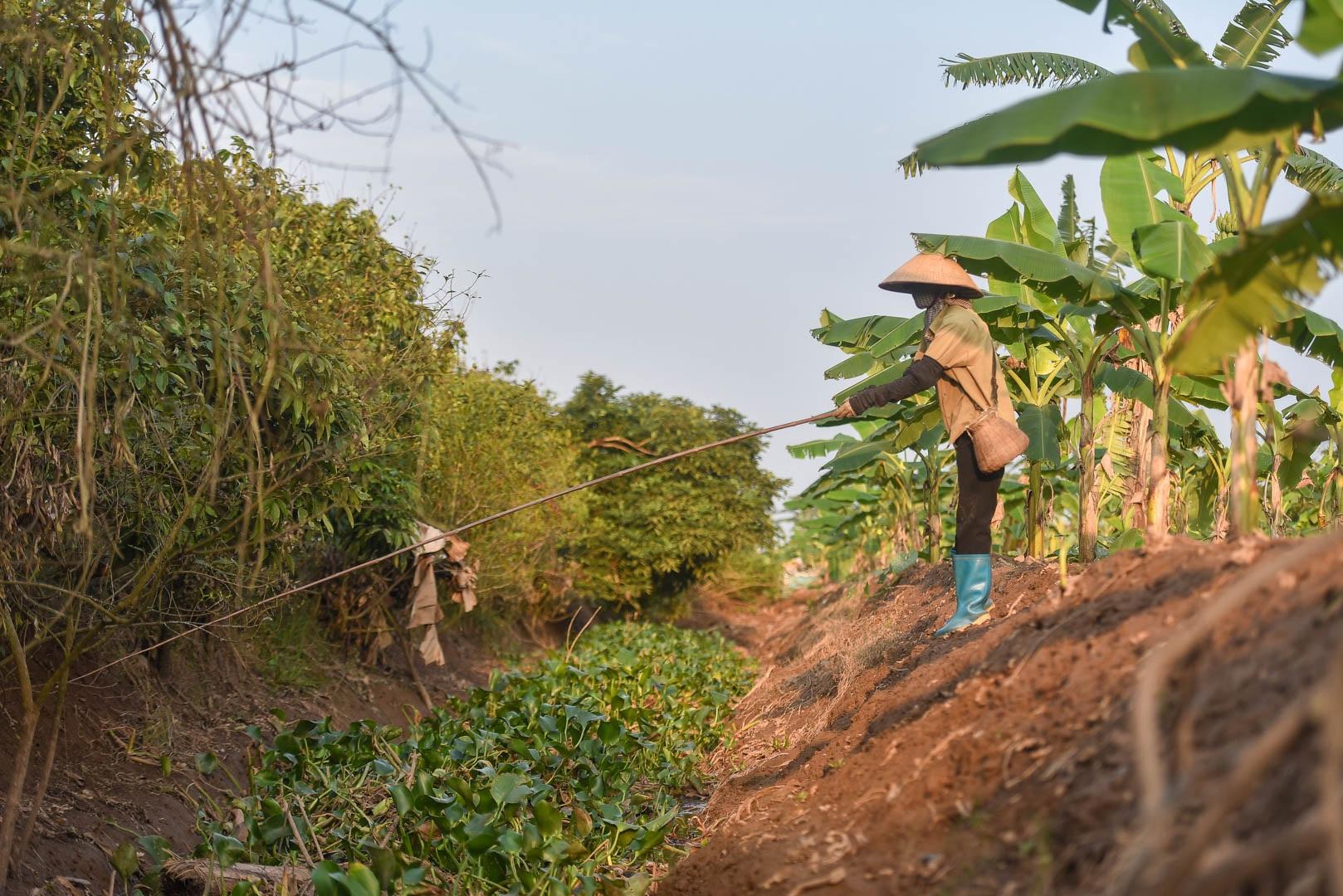 Câu con lộc trời cho: nông dân Hải Dương kiếm nửa triệu đồng mỗi ngày - 1