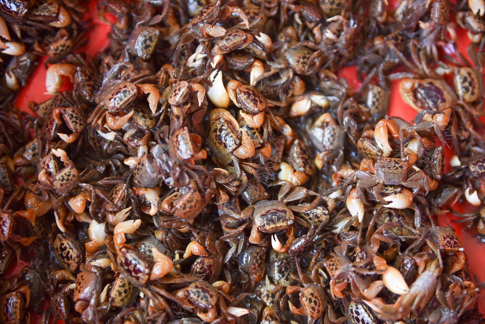 Câu con lộc trời cho: nông dân Hải Dương kiếm nửa triệu đồng mỗi ngày - 20