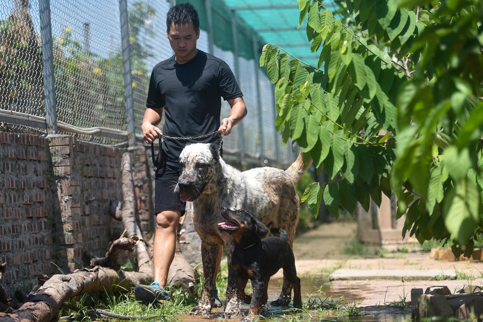9x cực nhọc chống nóng cho đàn chó khổng lồ giá hàng trăm triệu đồng - 22