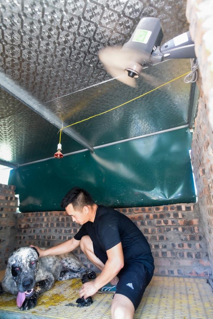 9x cực nhọc chống nóng cho đàn chó khổng lồ giá hàng trăm triệu đồng - 21