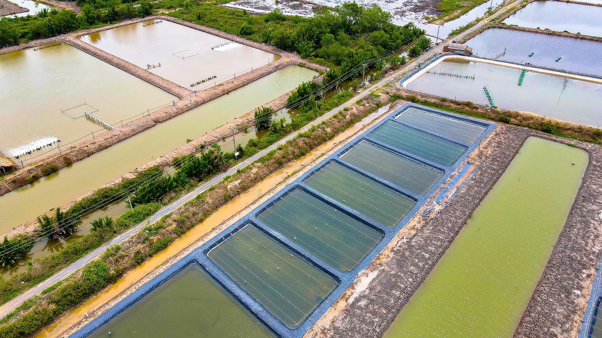 Nông dân đổi đời, thu tiền tỉ mỗi năm nhờ nuôi cá trời cho - 9