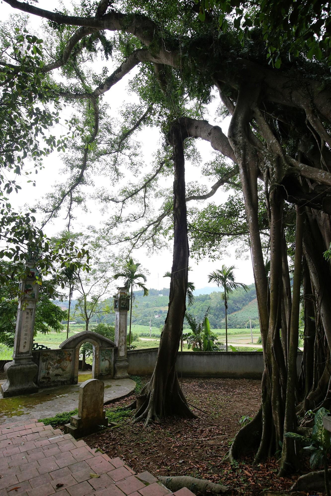 Tận mắt hai báu vật xanh tại vùng đất thiêng của Hà Nội - 11