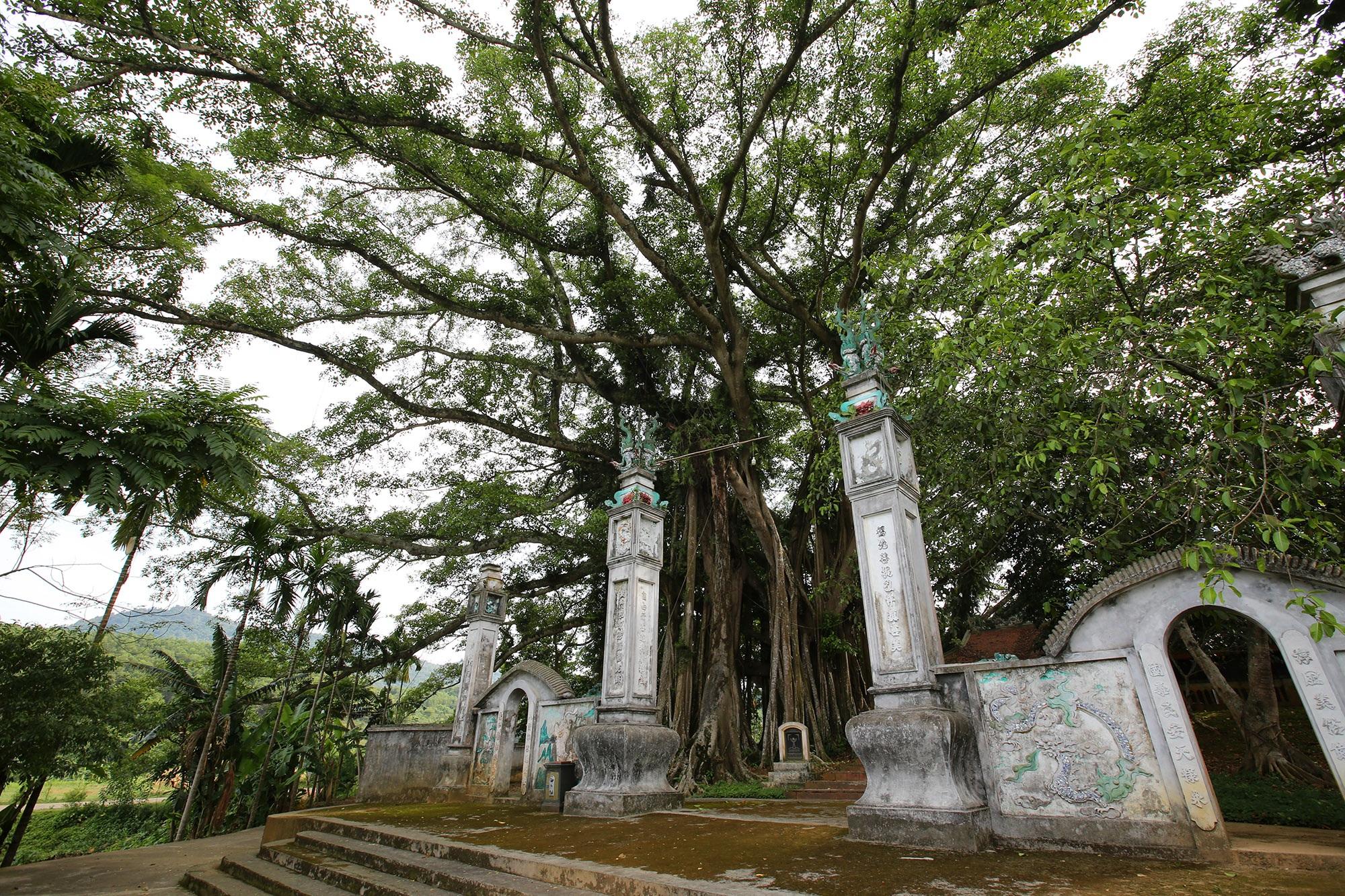 Tận mắt hai báu vật xanh tại vùng đất thiêng của Hà Nội - 2