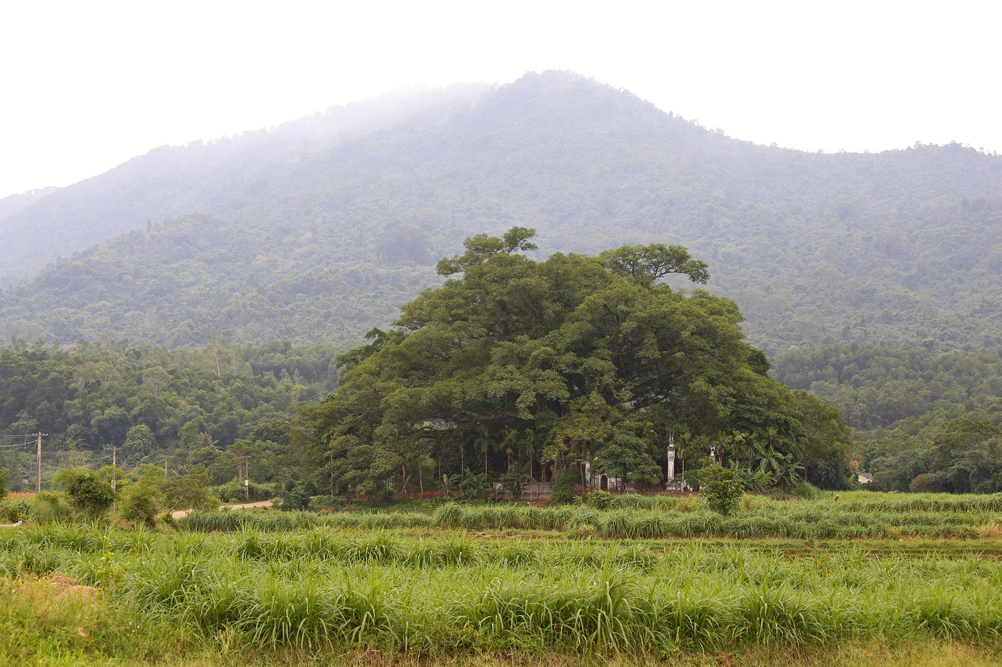 Tận mắt hai báu vật xanh tại vùng đất thiêng của Hà Nội - 9