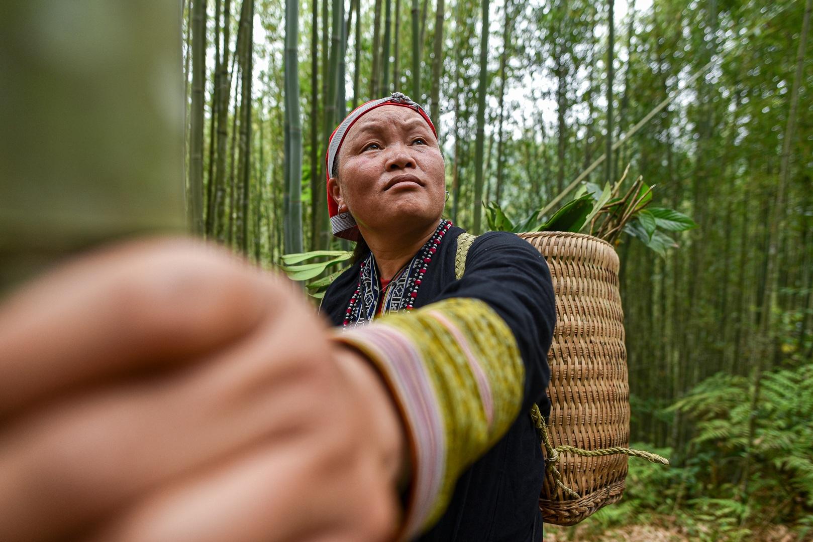 Băng rừng theo người Dao đỏ Sapa đi hái lá thuốc tắm thần dược - 5