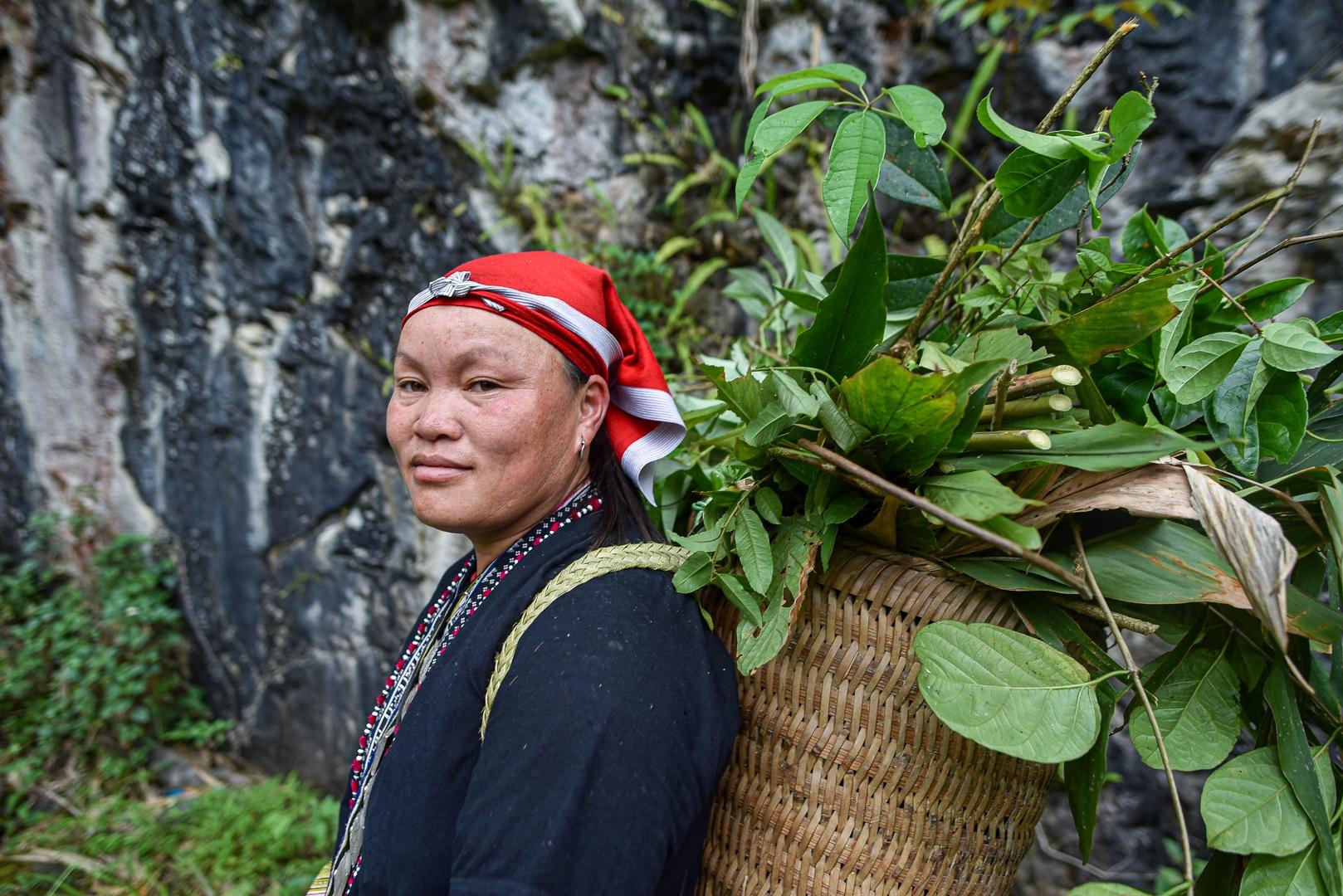 Băng rừng theo người Dao đỏ Sapa đi hái lá thuốc tắm thần dược - 4