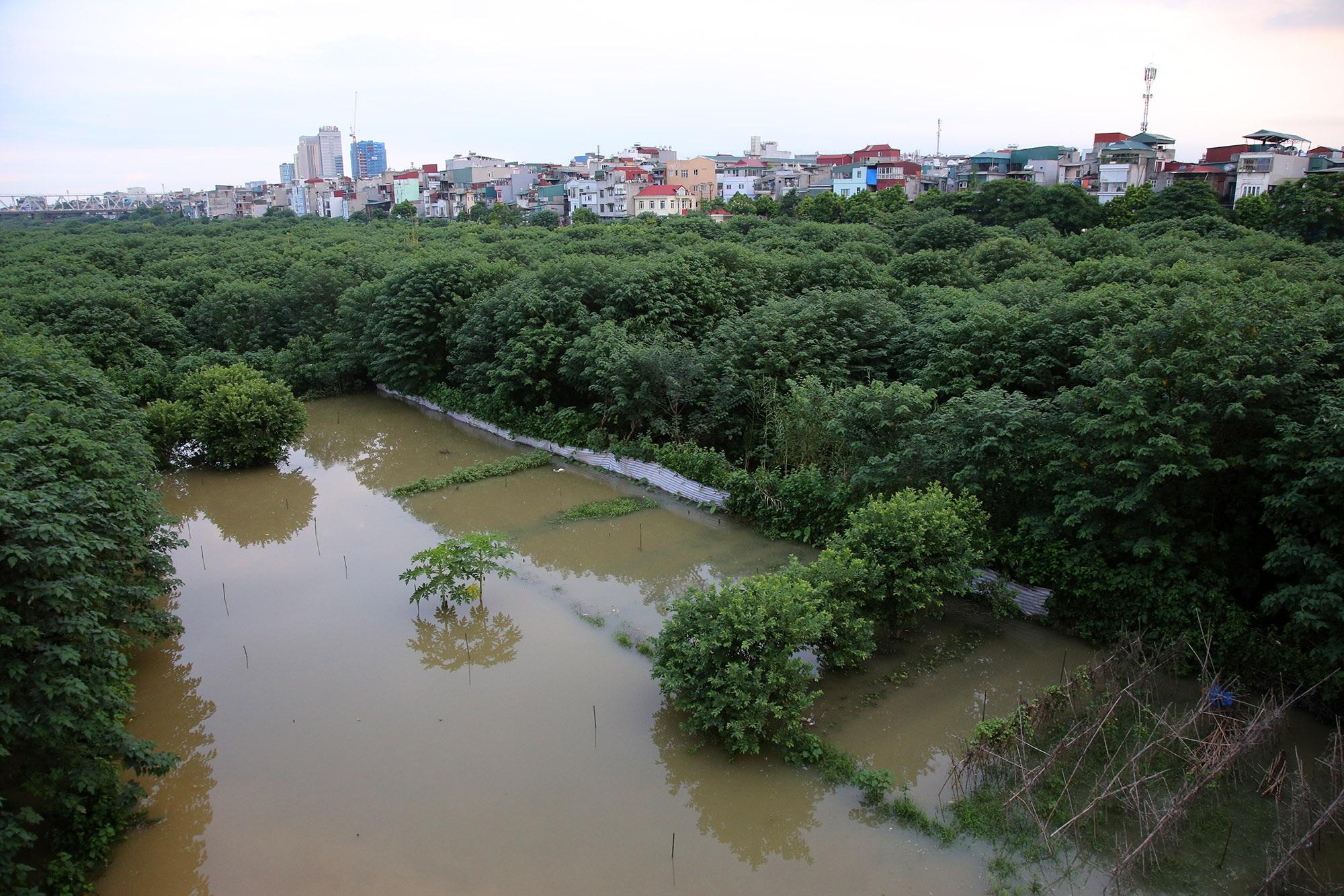 Cảnh nước dâng cao, chảy cuồn cuộn trên sông Hồng, sông Đuống - 15