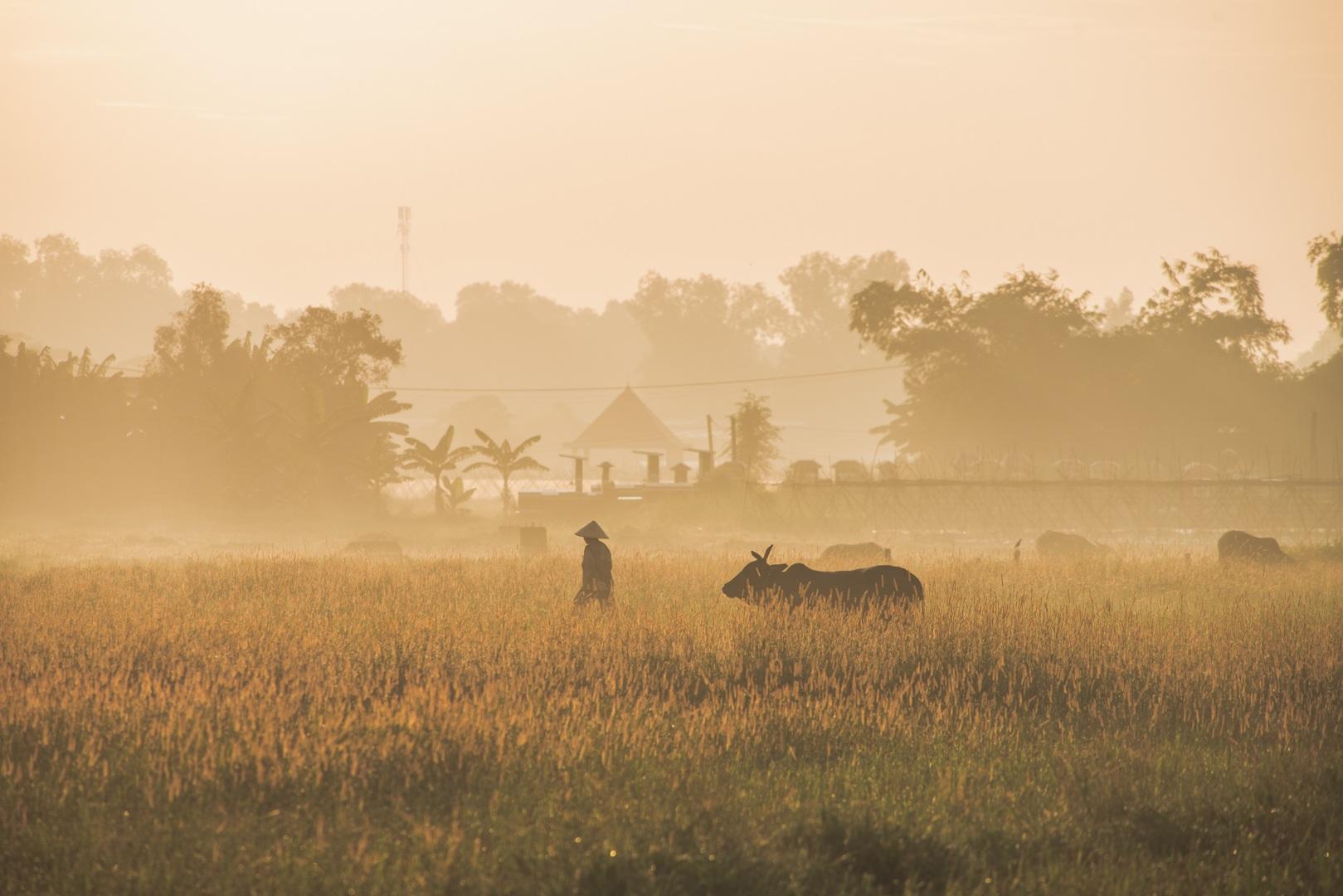 Ngoại ô Sài Gòn đẹp tựa phim trong buổi bình minh - 1