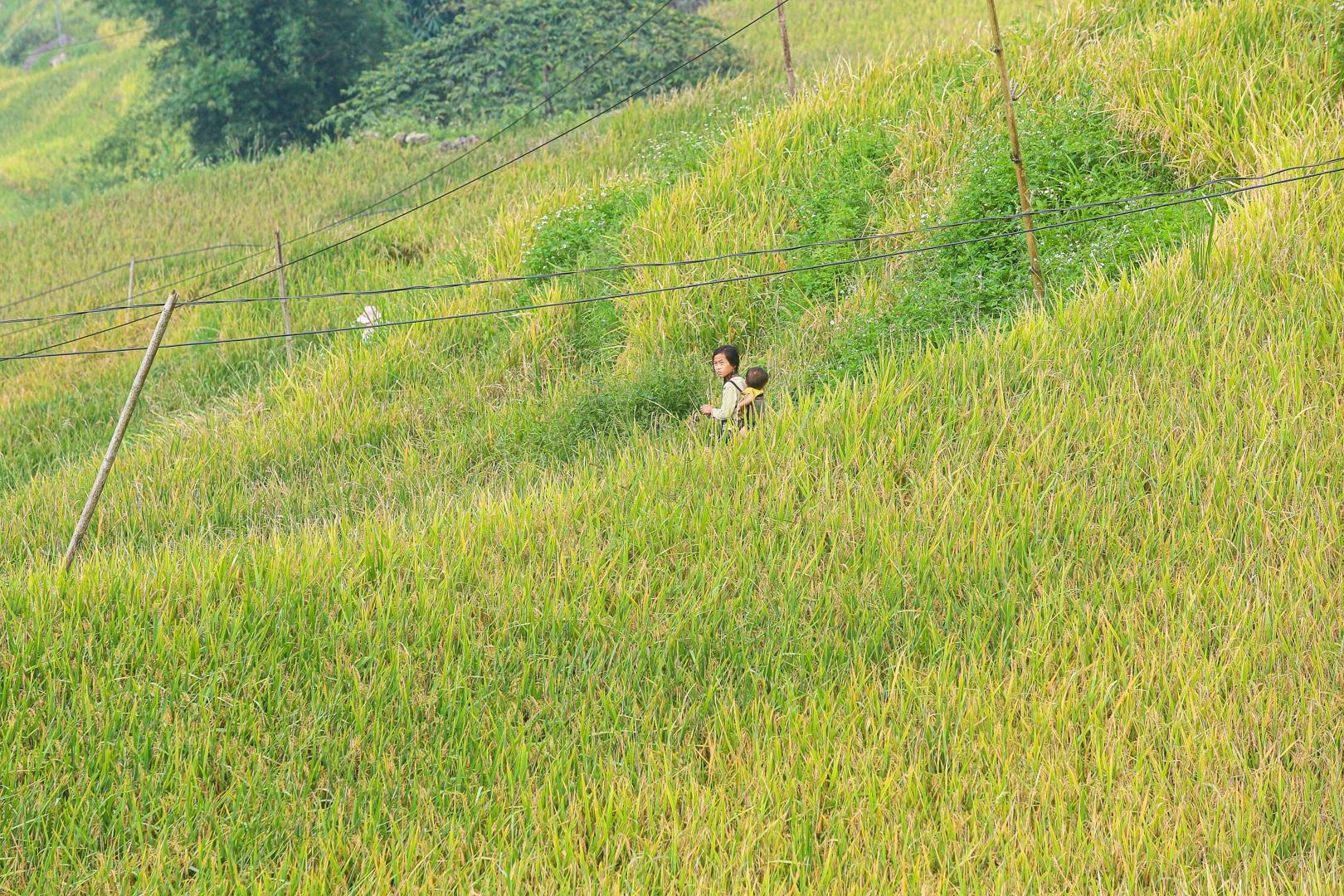 Đi săn mùa vàng ở Sa Pa - 9