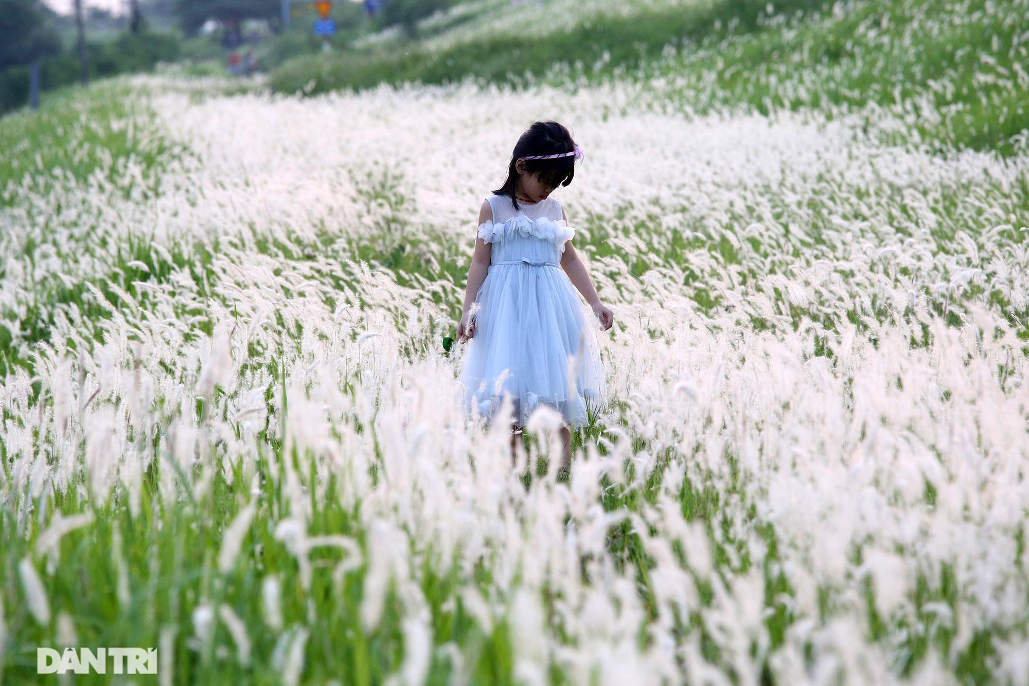 Thiên đường cỏ tranh trắng muốt tại Hà Nội - 11