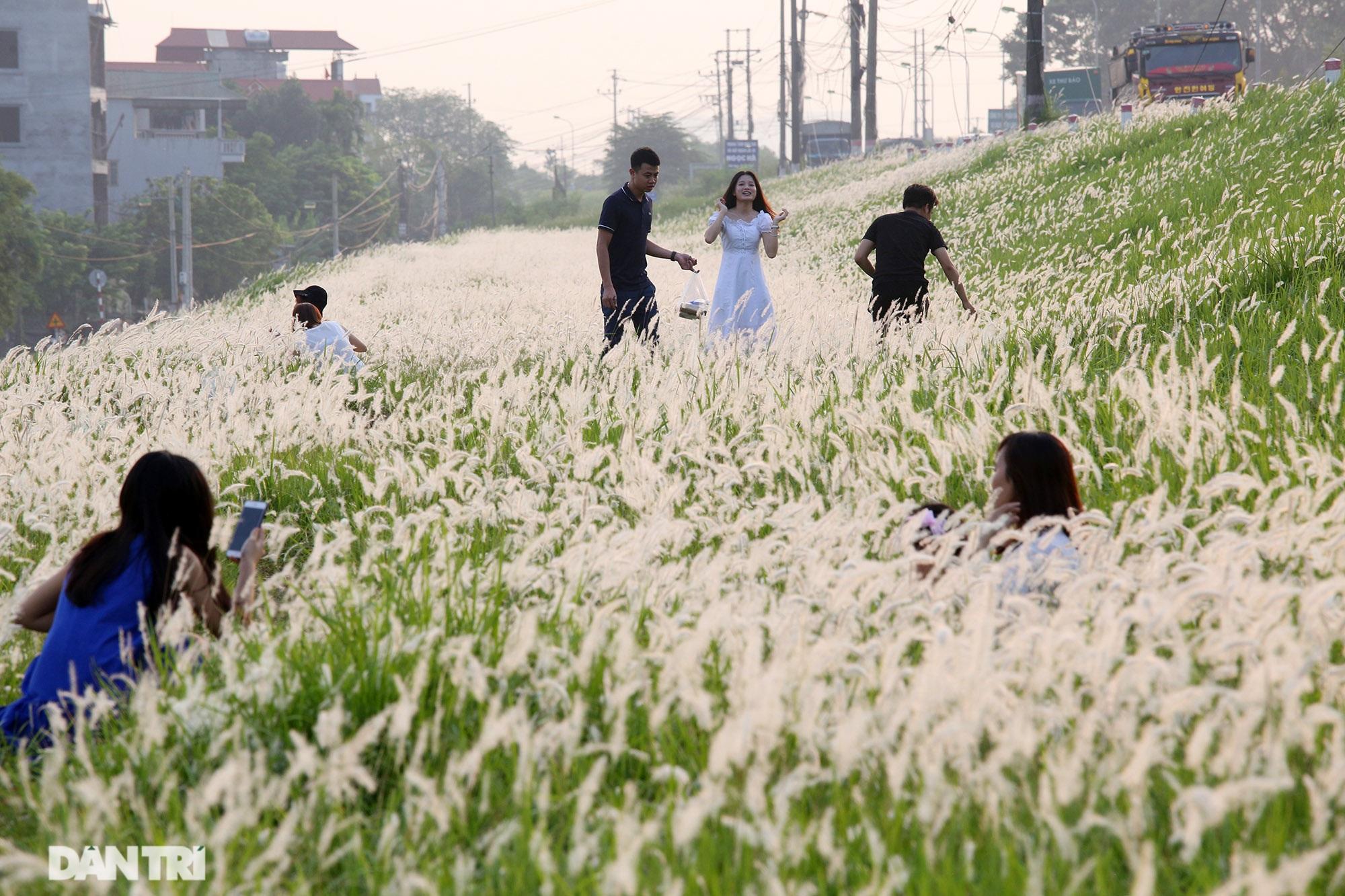 Thiên đường cỏ tranh trắng muốt tại Hà Nội - 15