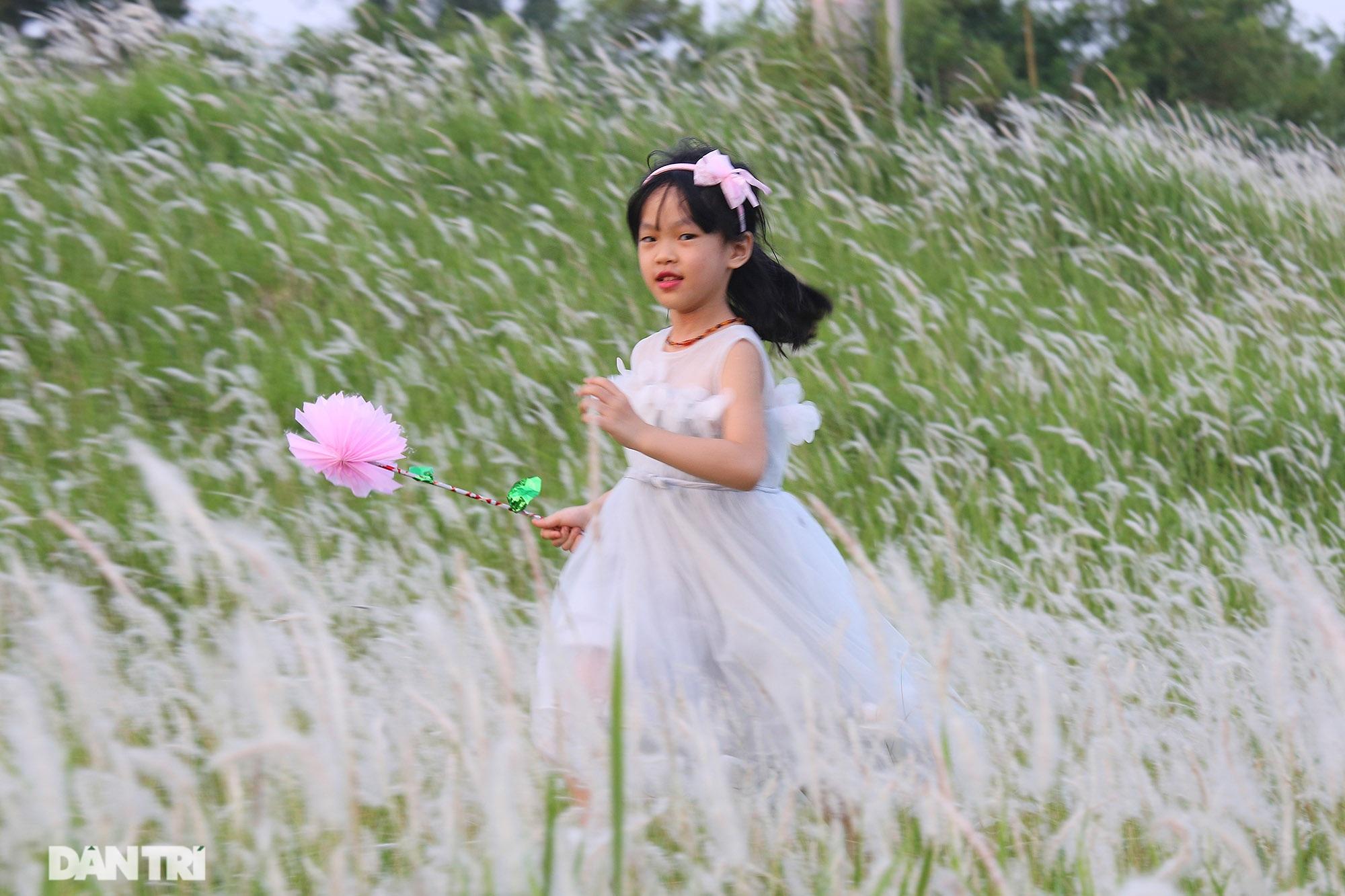 Thiên đường cỏ tranh trắng muốt tại Hà Nội - 4
