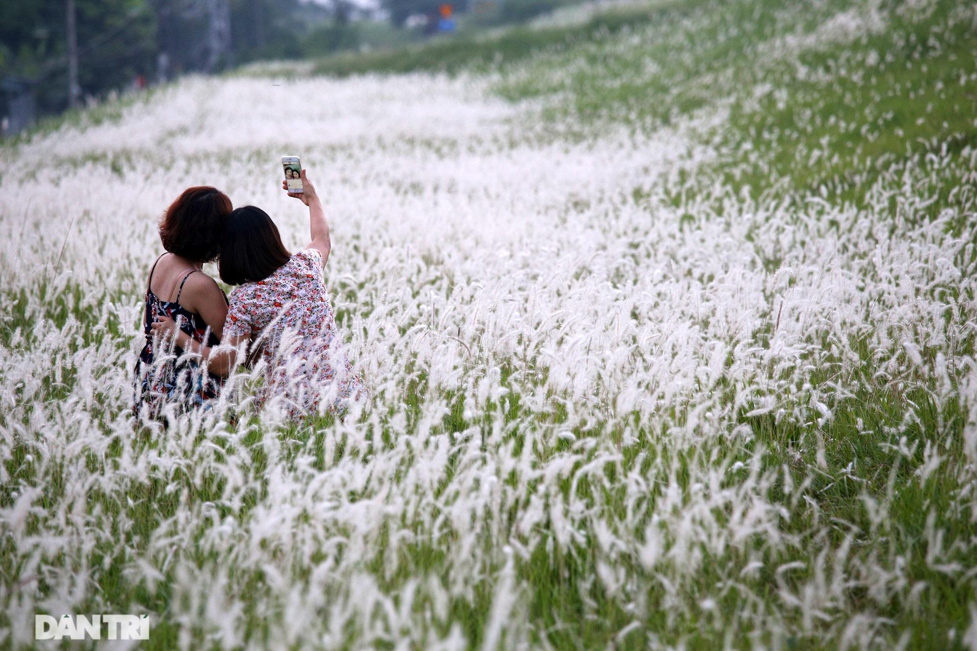 Thiên đường cỏ tranh trắng muốt tại Hà Nội - 5
