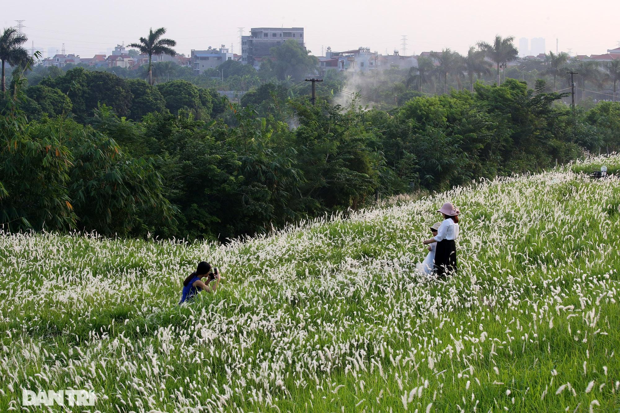 Thiên đường cỏ tranh trắng muốt tại Hà Nội - 7