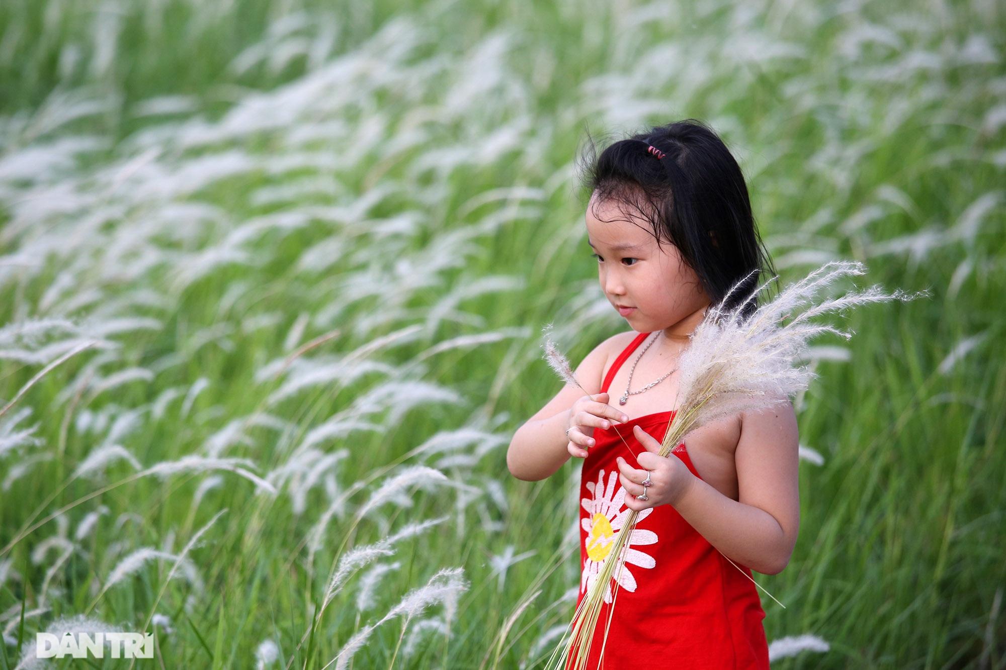 Thiên đường cỏ tranh trắng muốt tại Hà Nội - 9