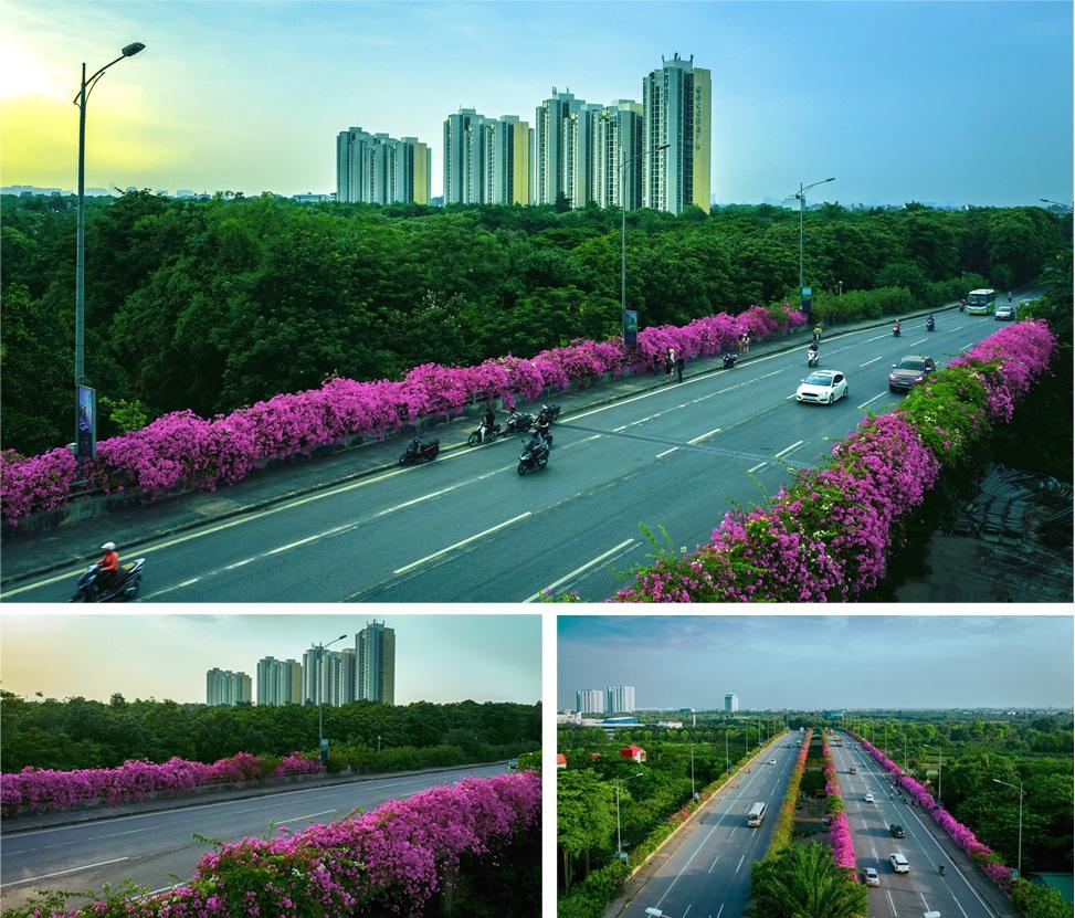 Ngắm thành phố xanh Ecopark đẹp mê mẩn trong mùa hoa giấy - 2