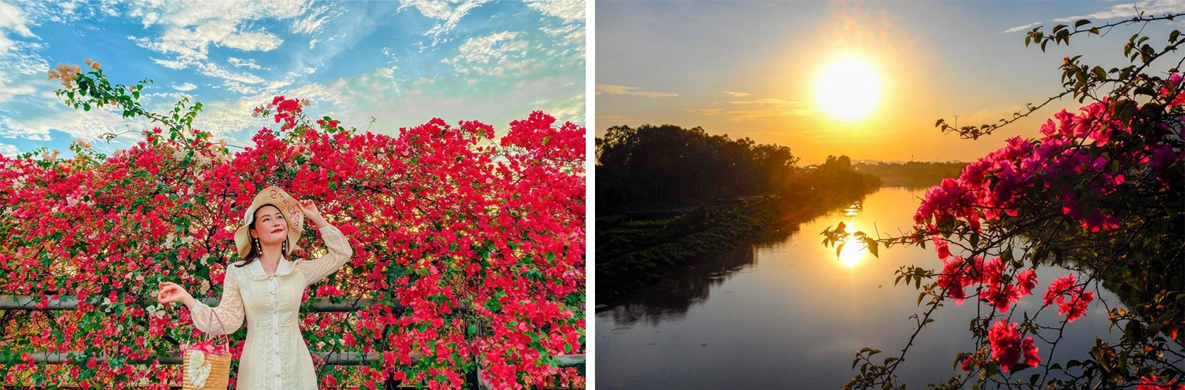 Ngắm thành phố xanh Ecopark đẹp mê mẩn trong mùa hoa giấy - 4