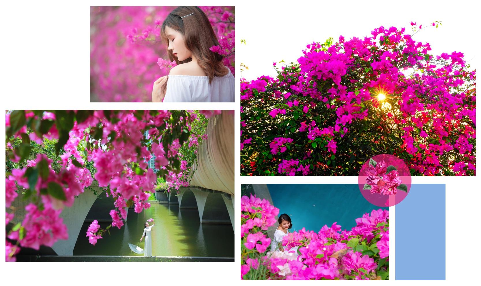 Ngắm thành phố xanh Ecopark đẹp mê mẩn trong mùa hoa giấy - 7