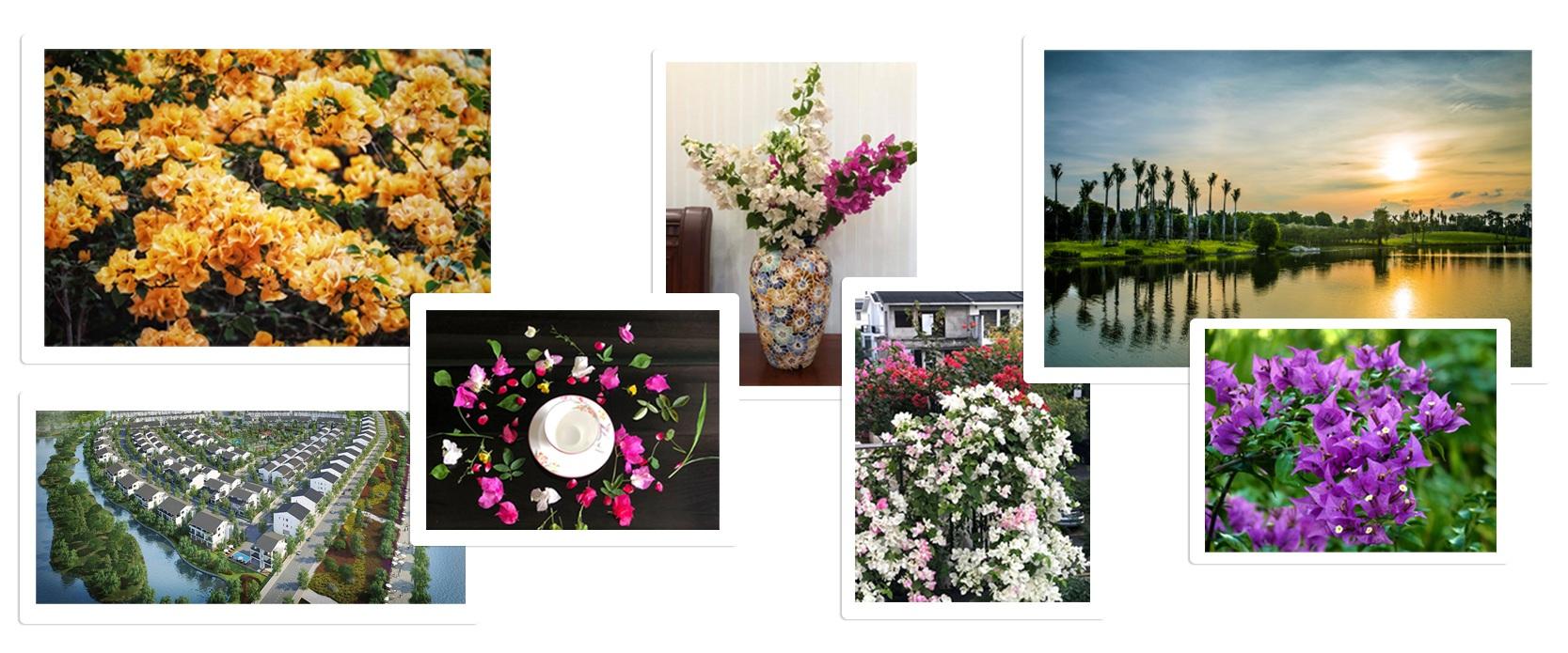 Ngắm thành phố xanh Ecopark đẹp mê mẩn trong mùa hoa giấy - 11