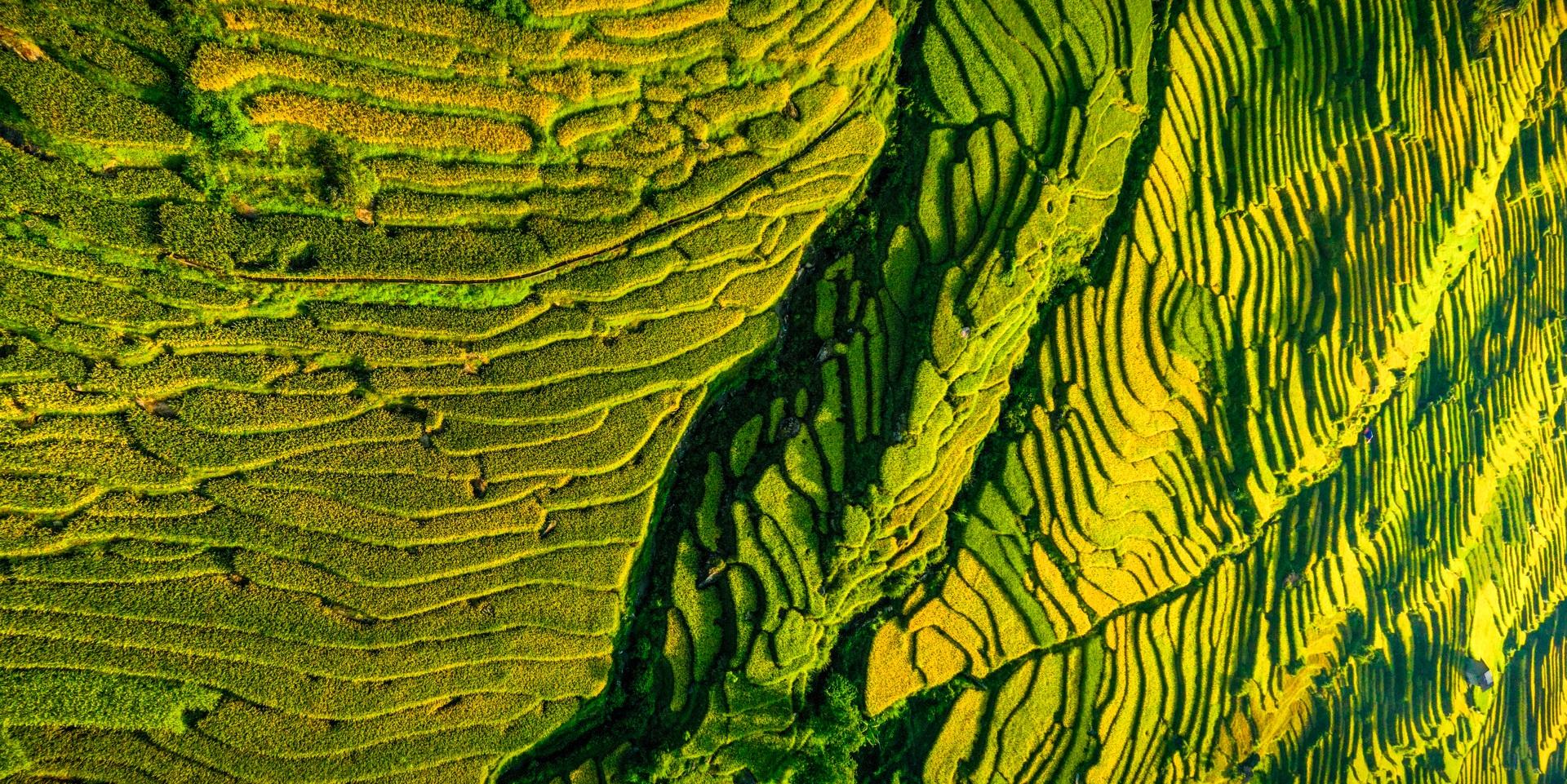 Mùa vàng Y Tý nhìn từ camera bay - 14