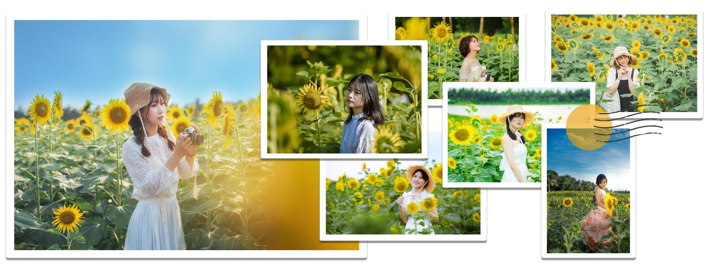 Ngắm cánh đồng hoa hướng dương rực rỡ, trải thảm vàng trong KĐT Ecopark - 4