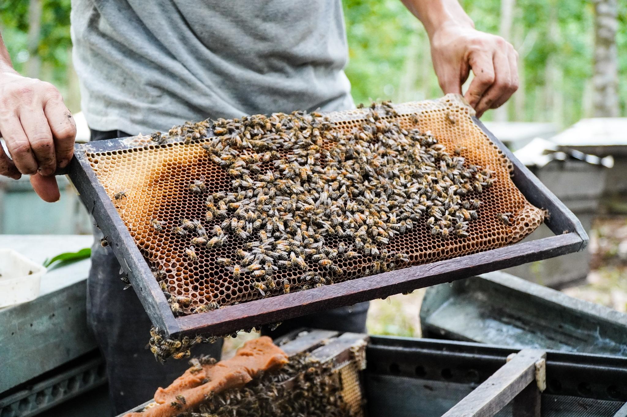 Nỗi khốn khổ của người nuôi ong sau bão lũ - 6