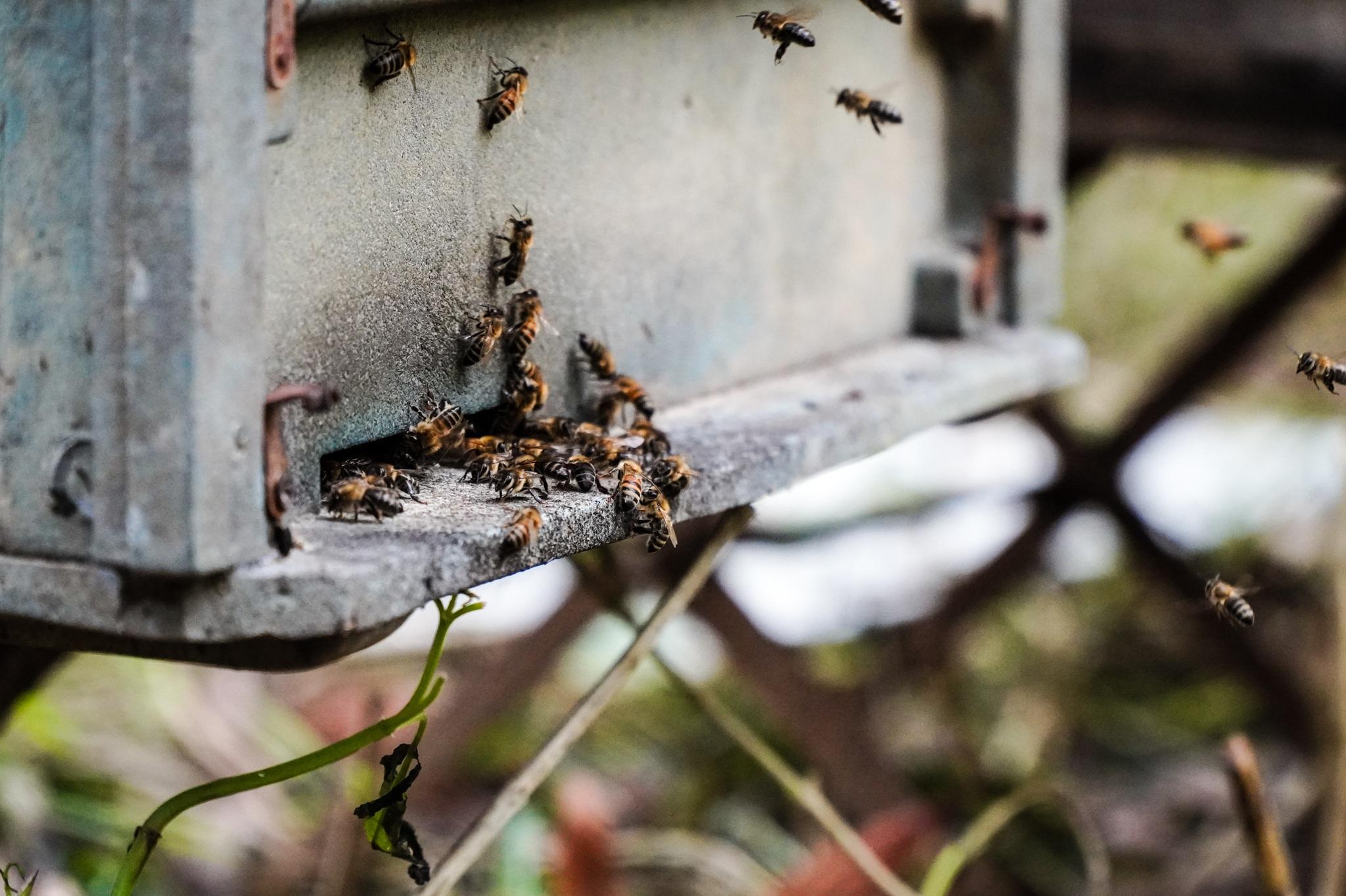 Nỗi khốn khổ của người nuôi ong sau bão lũ - 10