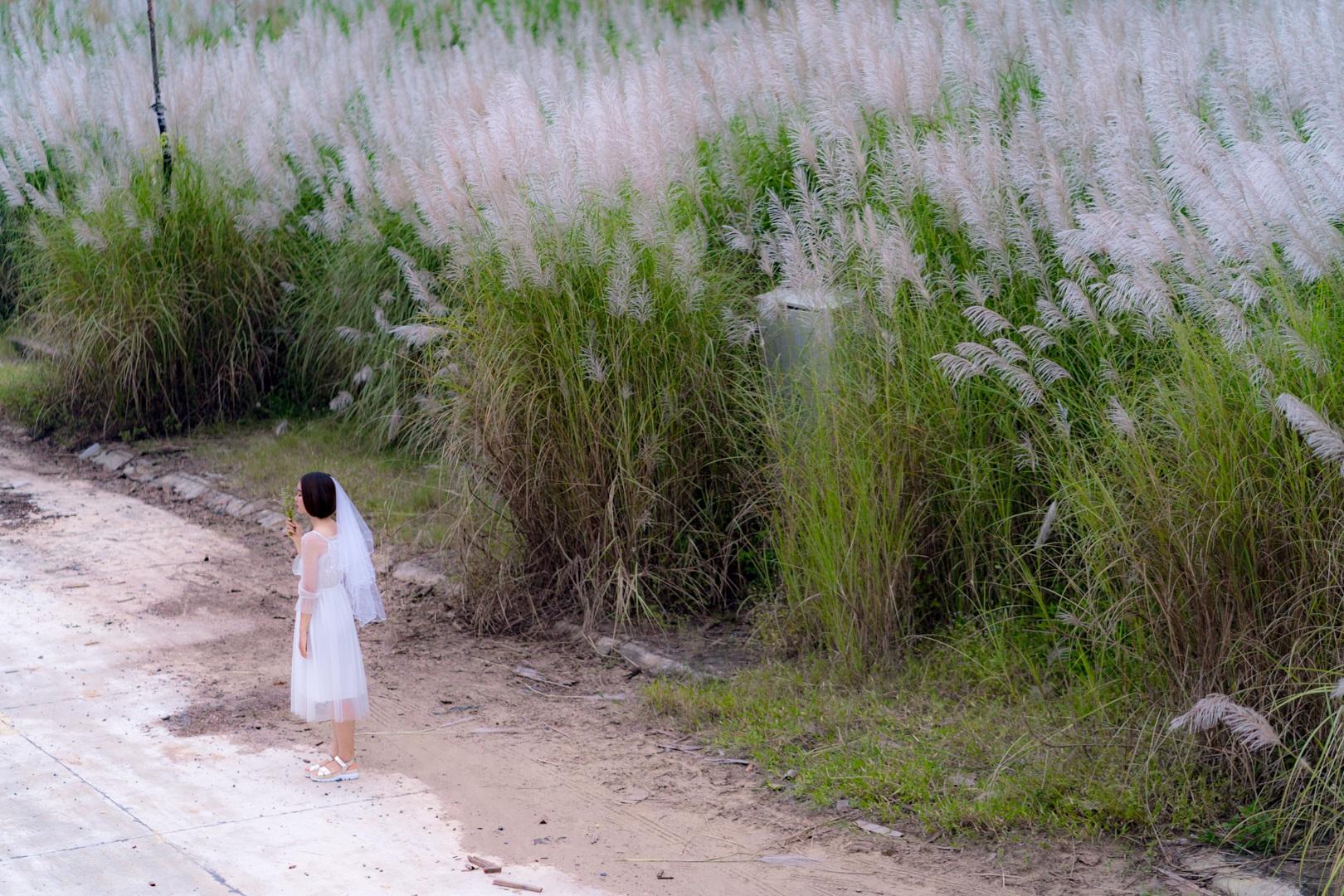 Bãi cỏ lau trắng tuyệt đẹp hút giới trẻ Hà thành tới sống ảo - 10