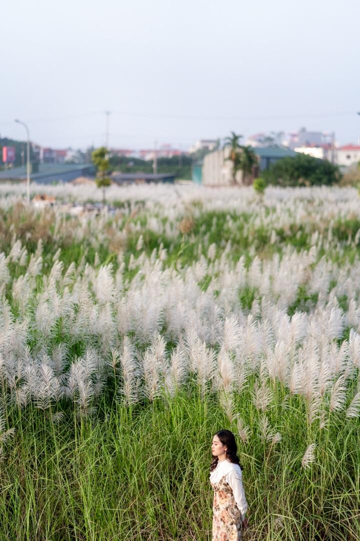 Bãi cỏ lau trắng tuyệt đẹp hút giới trẻ Hà thành tới sống ảo - 6
