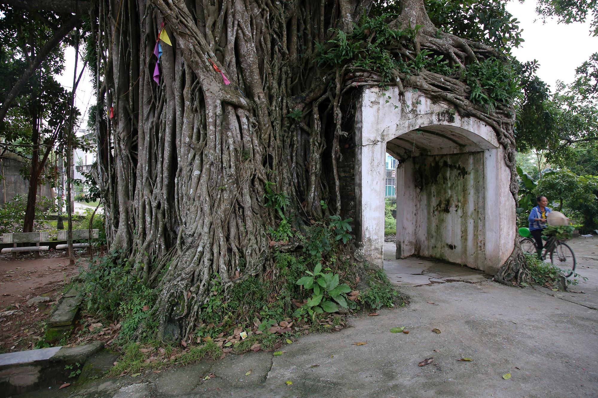 Lạc bước qua những kiệt tác cổng làng từ rễ cây độc đáo tại Bắc bộ - 2