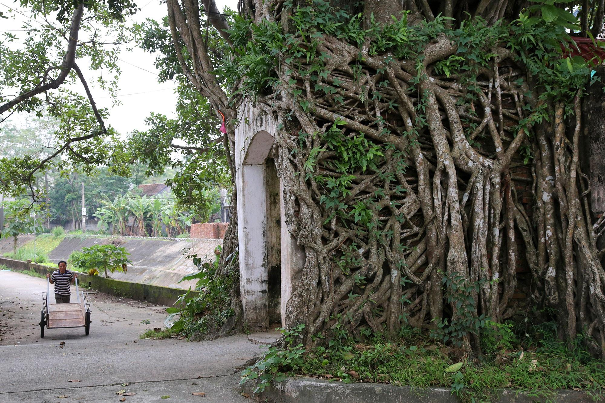 Lạc bước qua những kiệt tác cổng làng từ rễ cây độc đáo tại Bắc bộ - 3