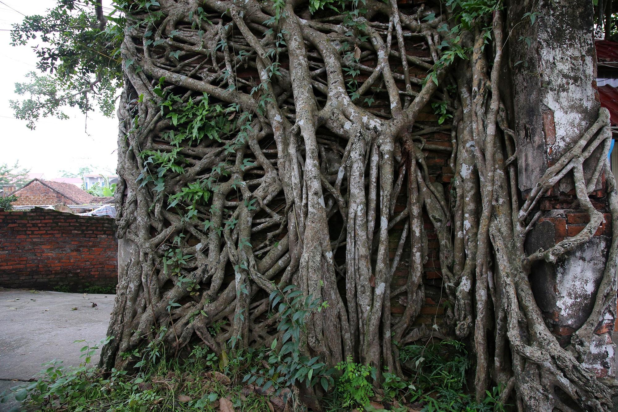 Lạc bước qua những kiệt tác cổng làng từ rễ cây độc đáo tại Bắc bộ - 5