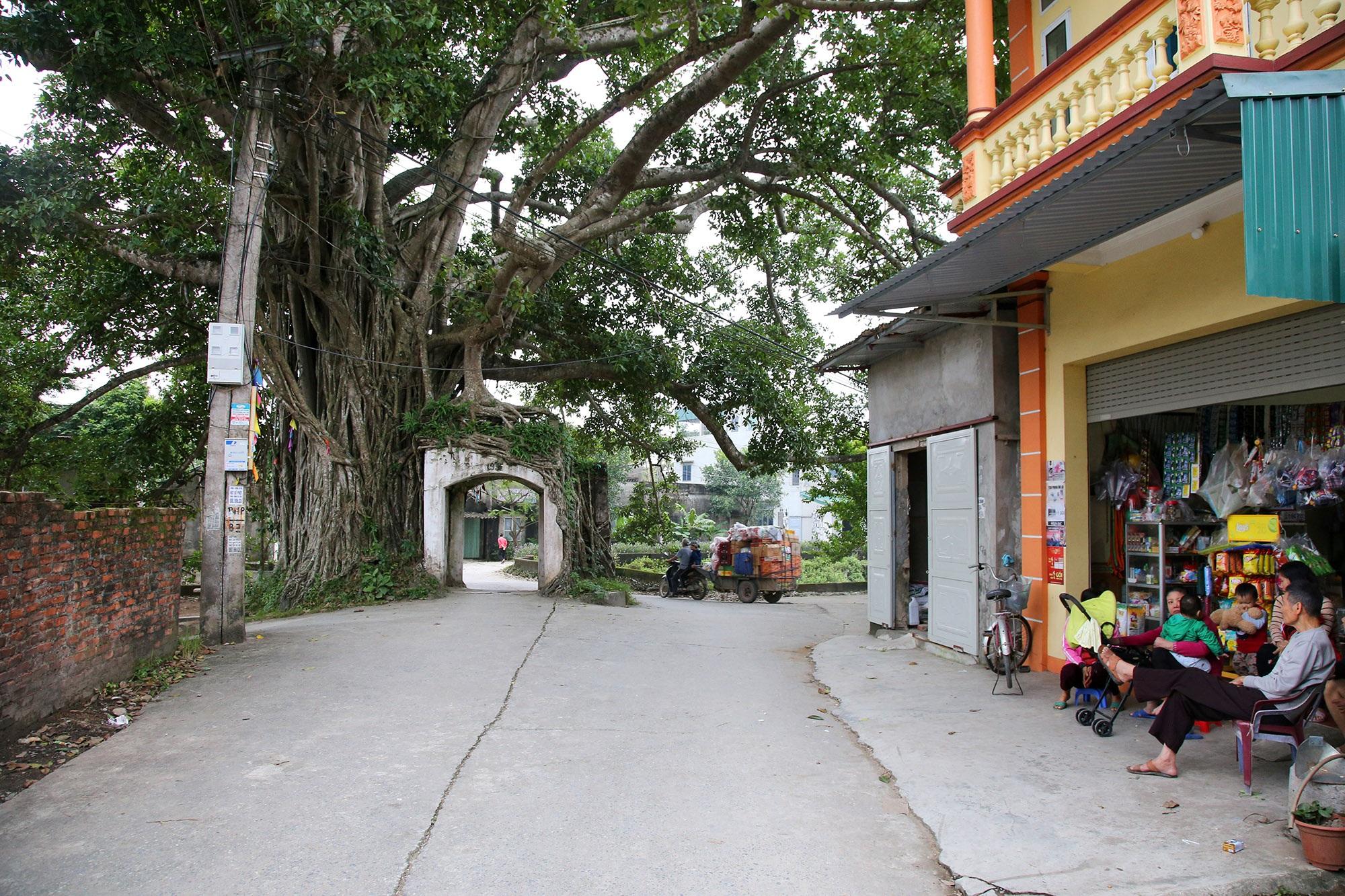 Lạc bước qua những kiệt tác cổng làng từ rễ cây độc đáo tại Bắc bộ - 6