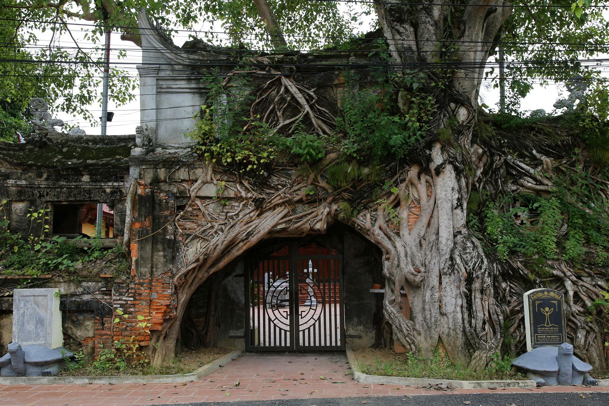 Lạc bước qua những kiệt tác cổng làng từ rễ cây độc đáo tại Bắc bộ - 8