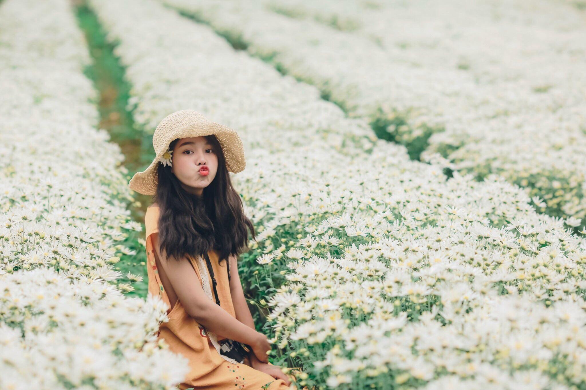 Ngẩn ngơ ngắm cánh đồng cúc họa mi giữa cao nguyên Mộc Châu - 15