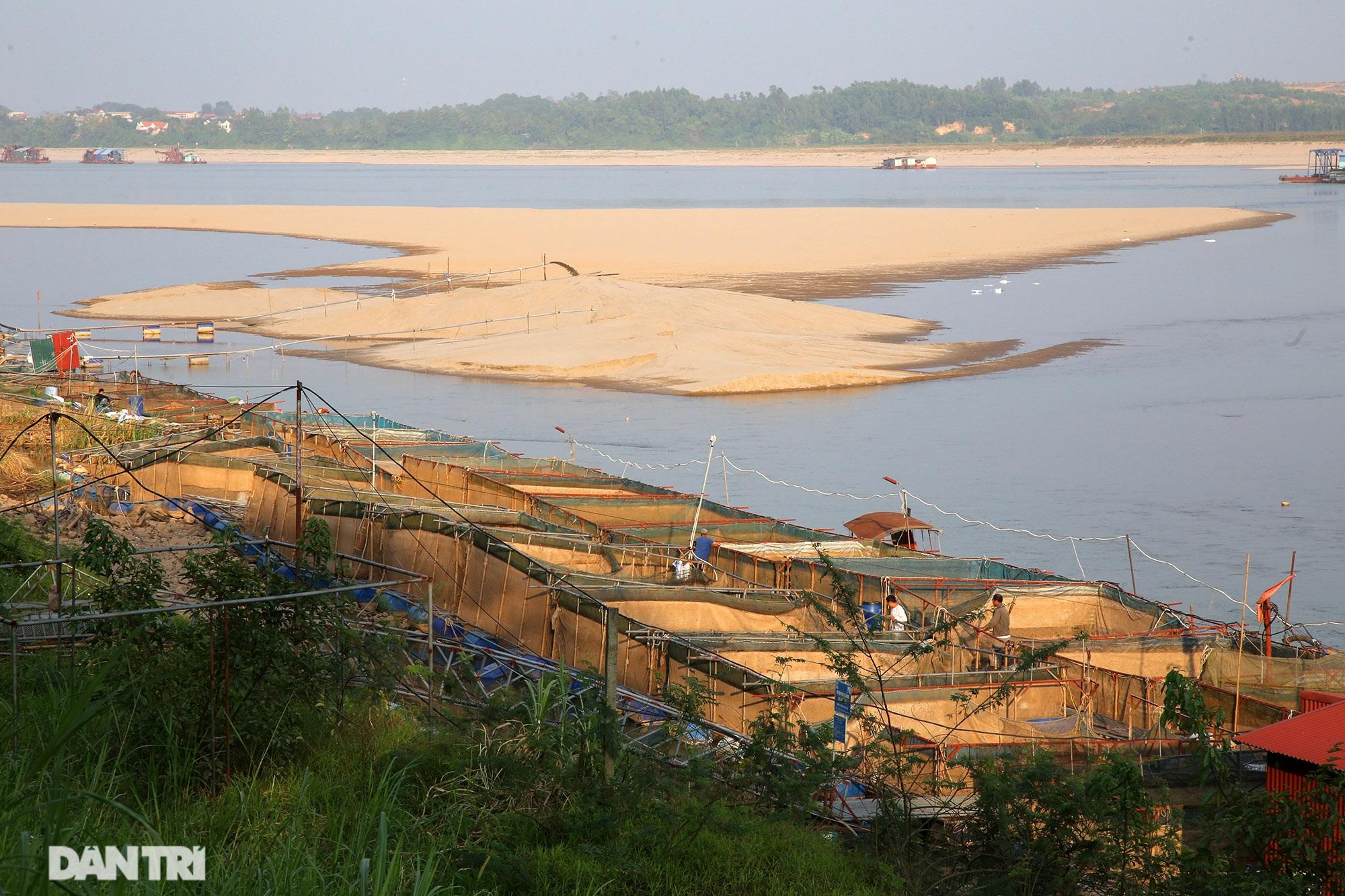 Sông Đà cạn trơ đáy, nông dân hối hả bơm cát cứu cá - 1