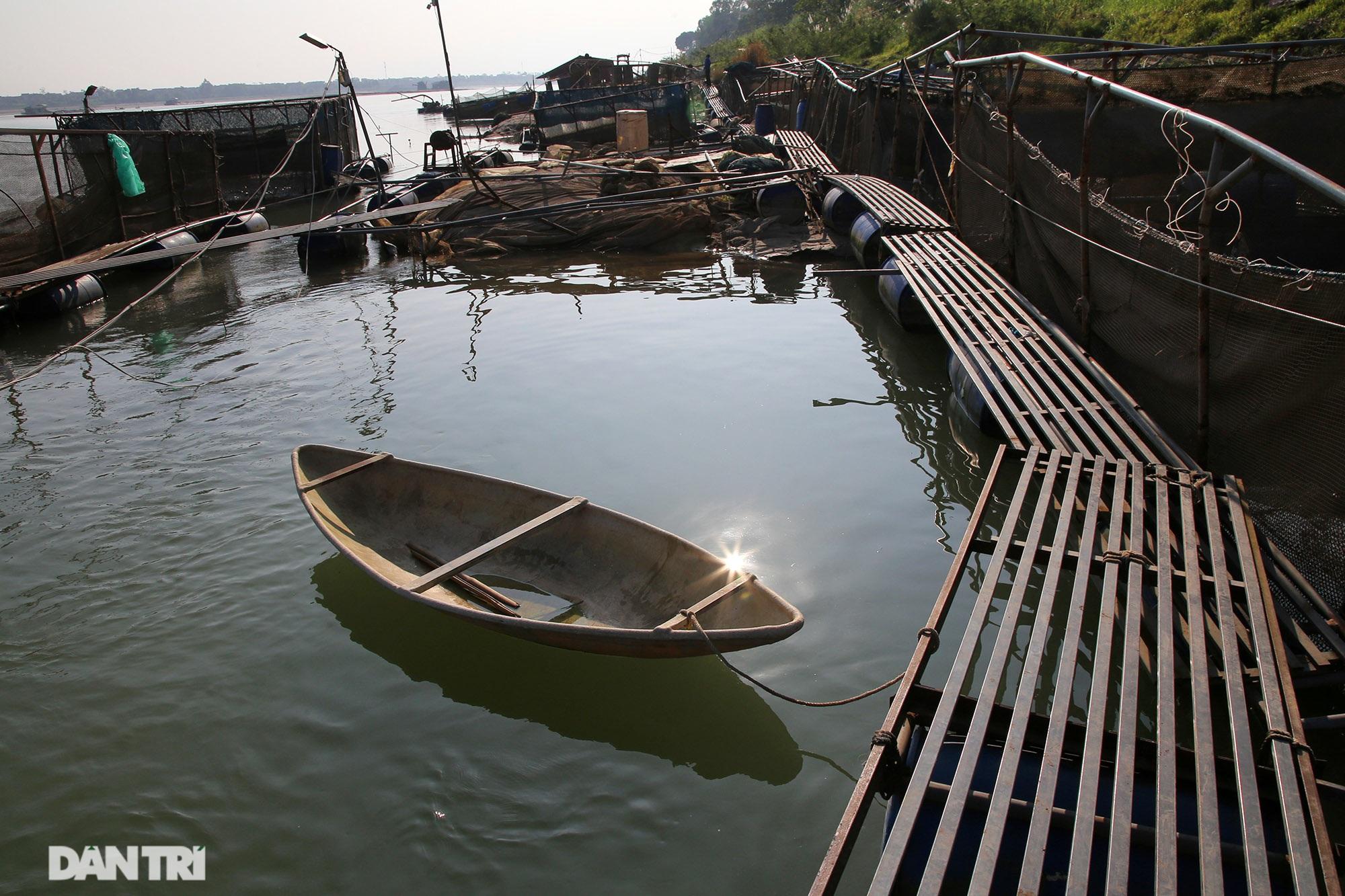 Sông Đà cạn trơ đáy, nông dân hối hả bơm cát cứu cá - 12