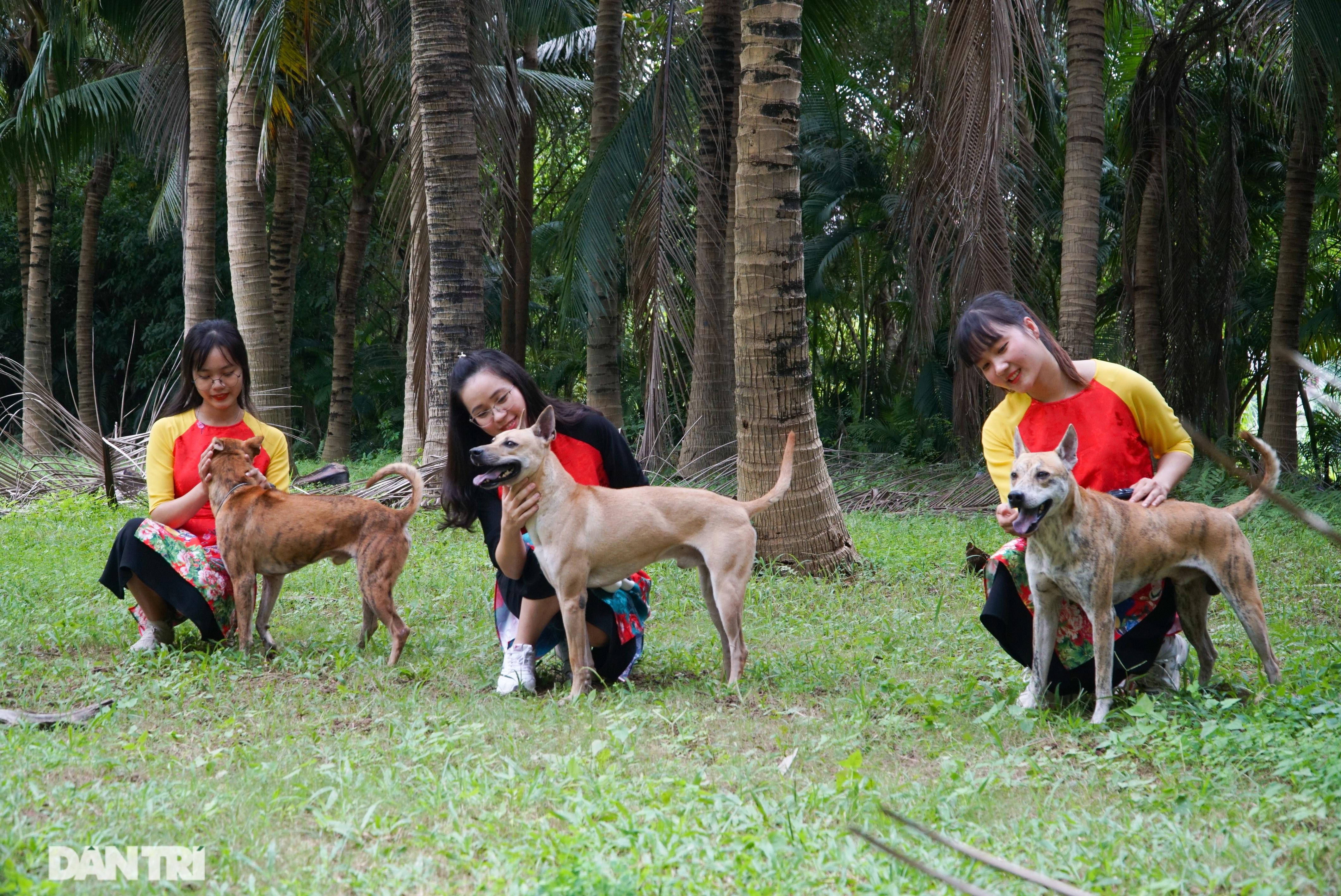 Những chú chó Phú Quốc có giá hàng trăm triệu đồng ở Hà Nội - 4