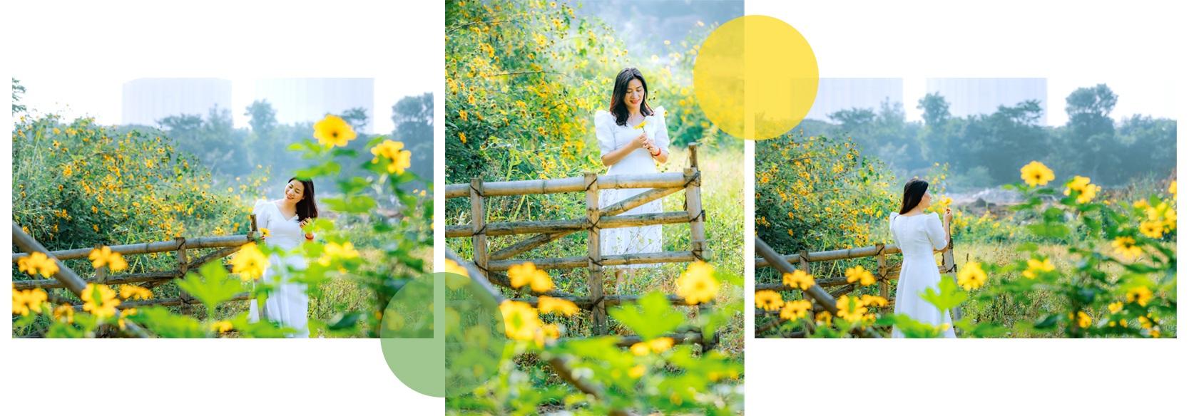 Về Ecopark ngắm cánh đồng hoa dã quỳ ngập tràn sắc vàng giữa trời đông - 5