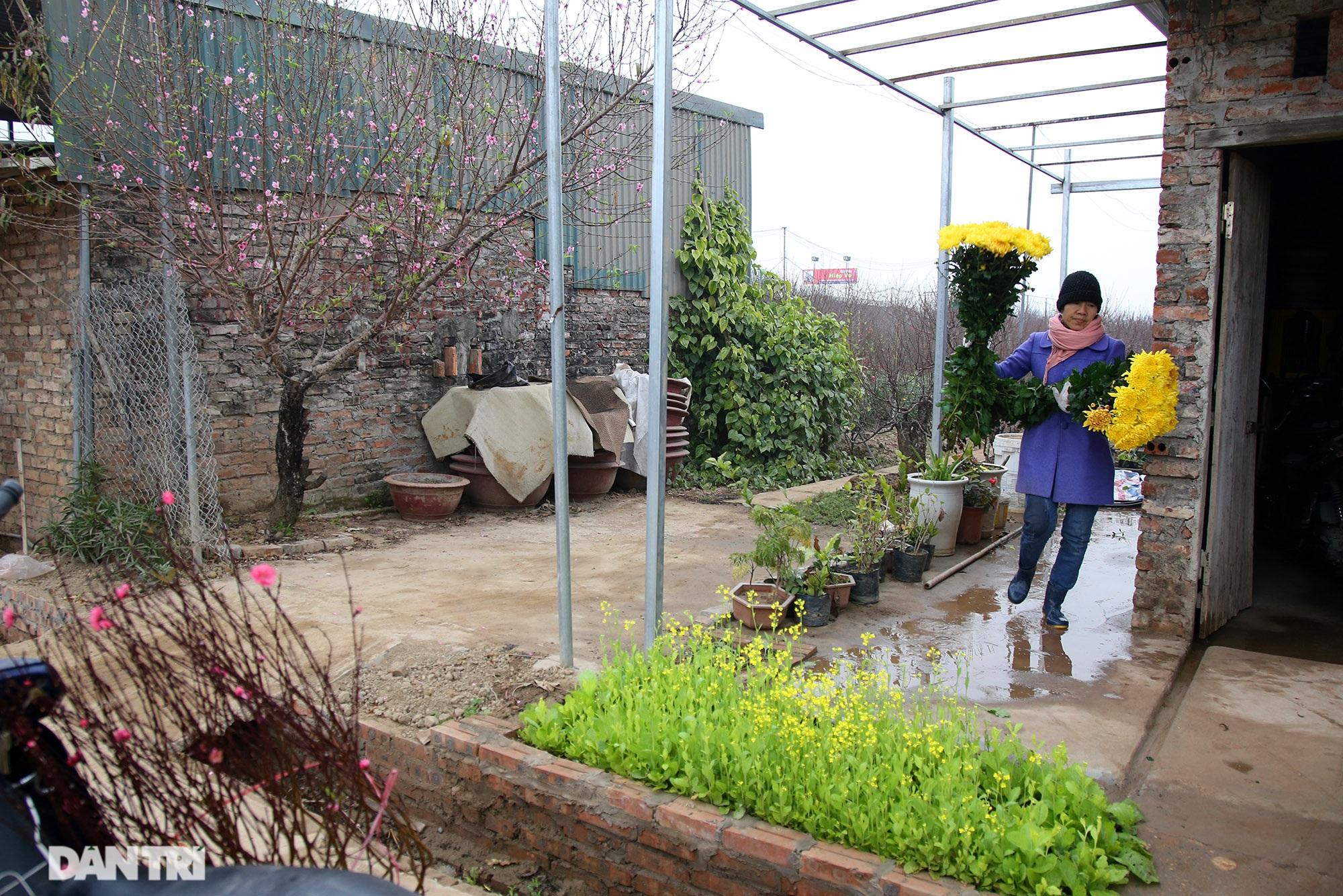 Hoa đào đỏ rực phủ kín cánh đồng Nhật Tân rộng bát ngát - 10