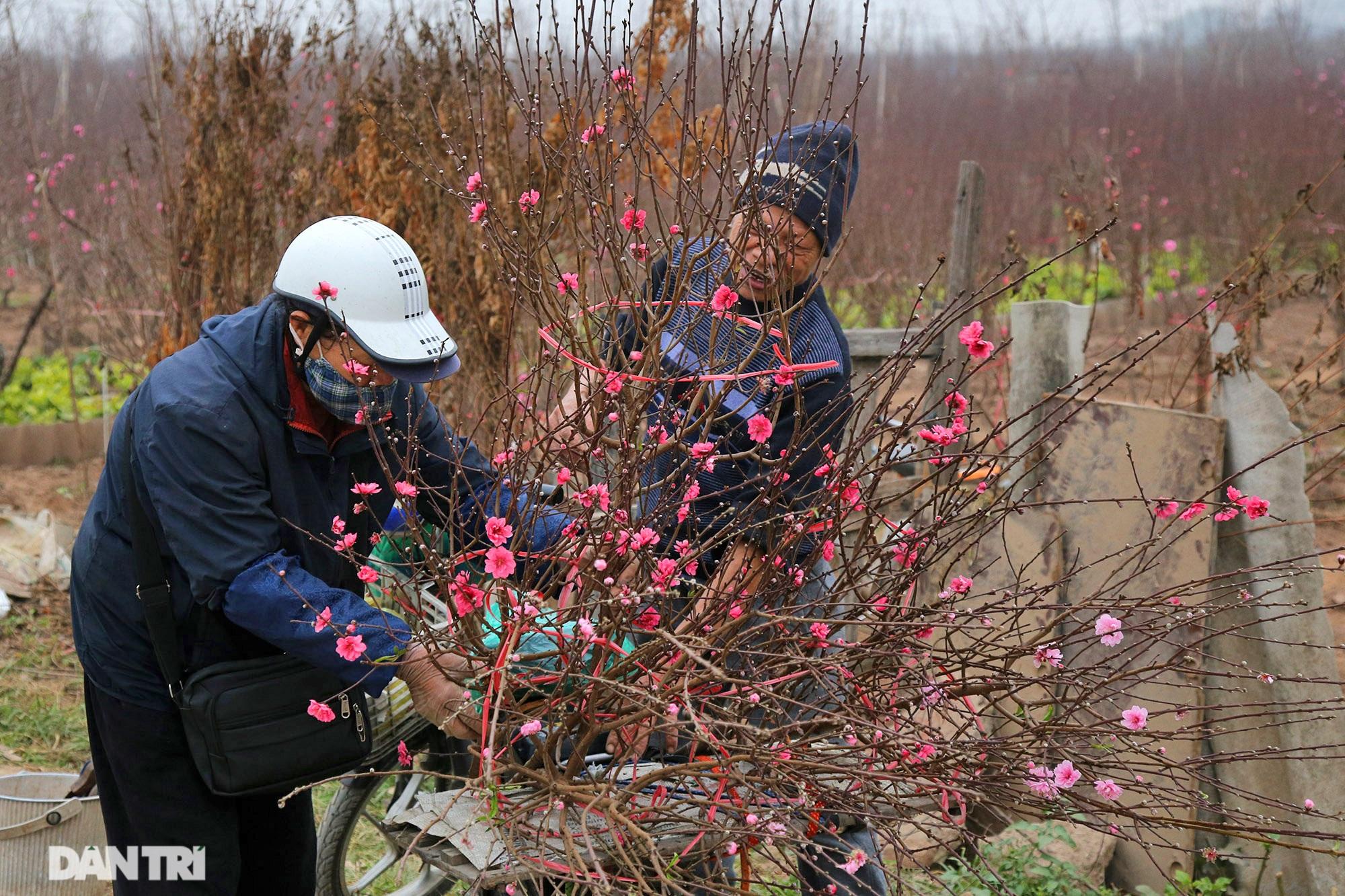 Hoa đào đỏ rực phủ kín cánh đồng Nhật Tân rộng bát ngát - 15