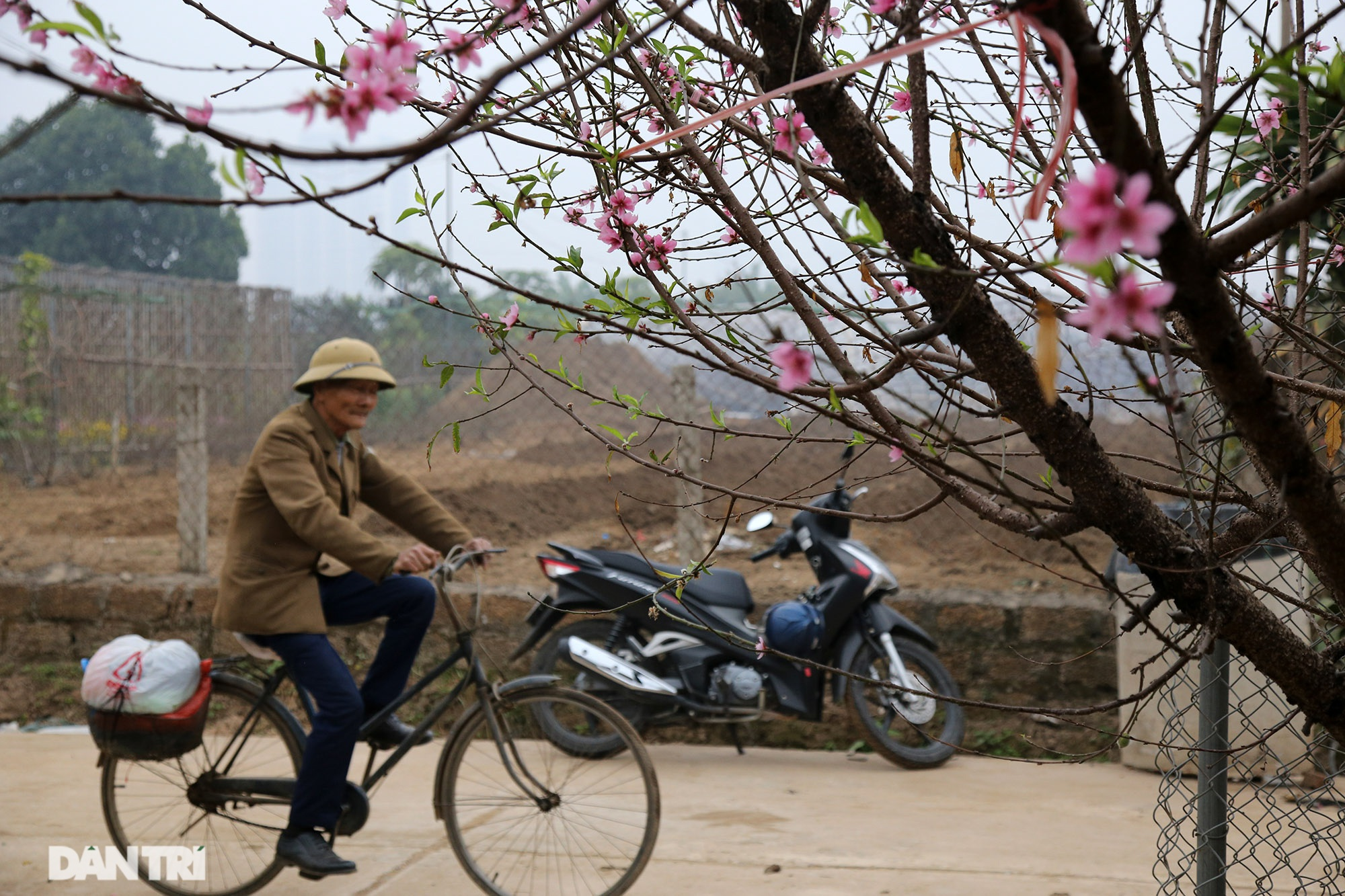 Hoa đào đỏ rực phủ kín cánh đồng Nhật Tân rộng bát ngát - 9