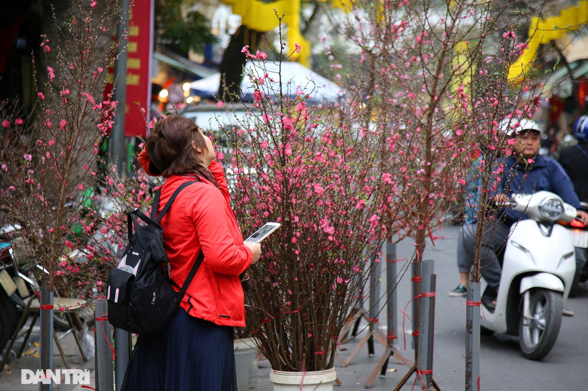 Chợ hoa Hàng Lược bắt đầu khoe sắc đón người dân sắm Tết - 3