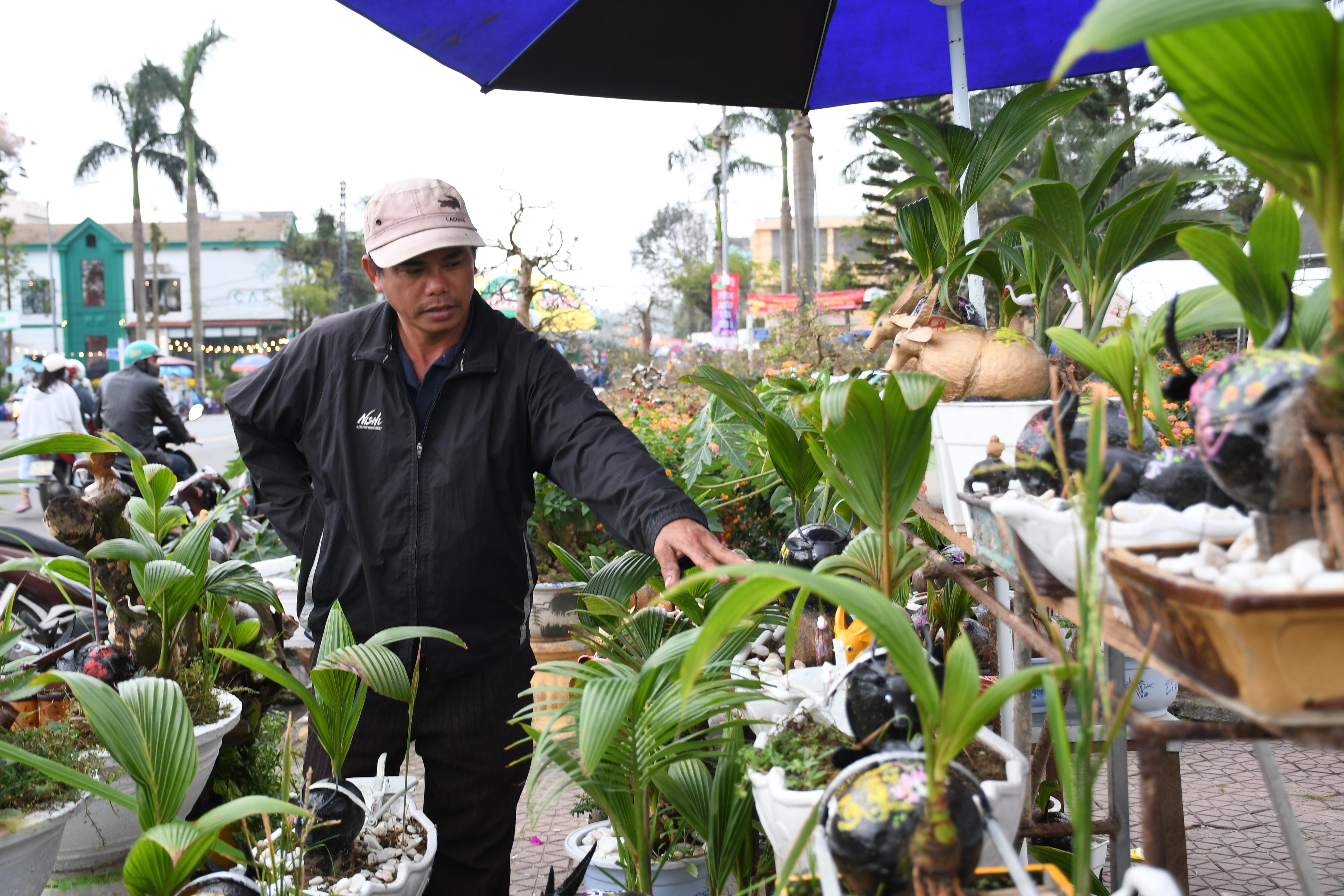 Độc đáo bonsai dừa hình trâu thu hút khách Tết Tân Sửu